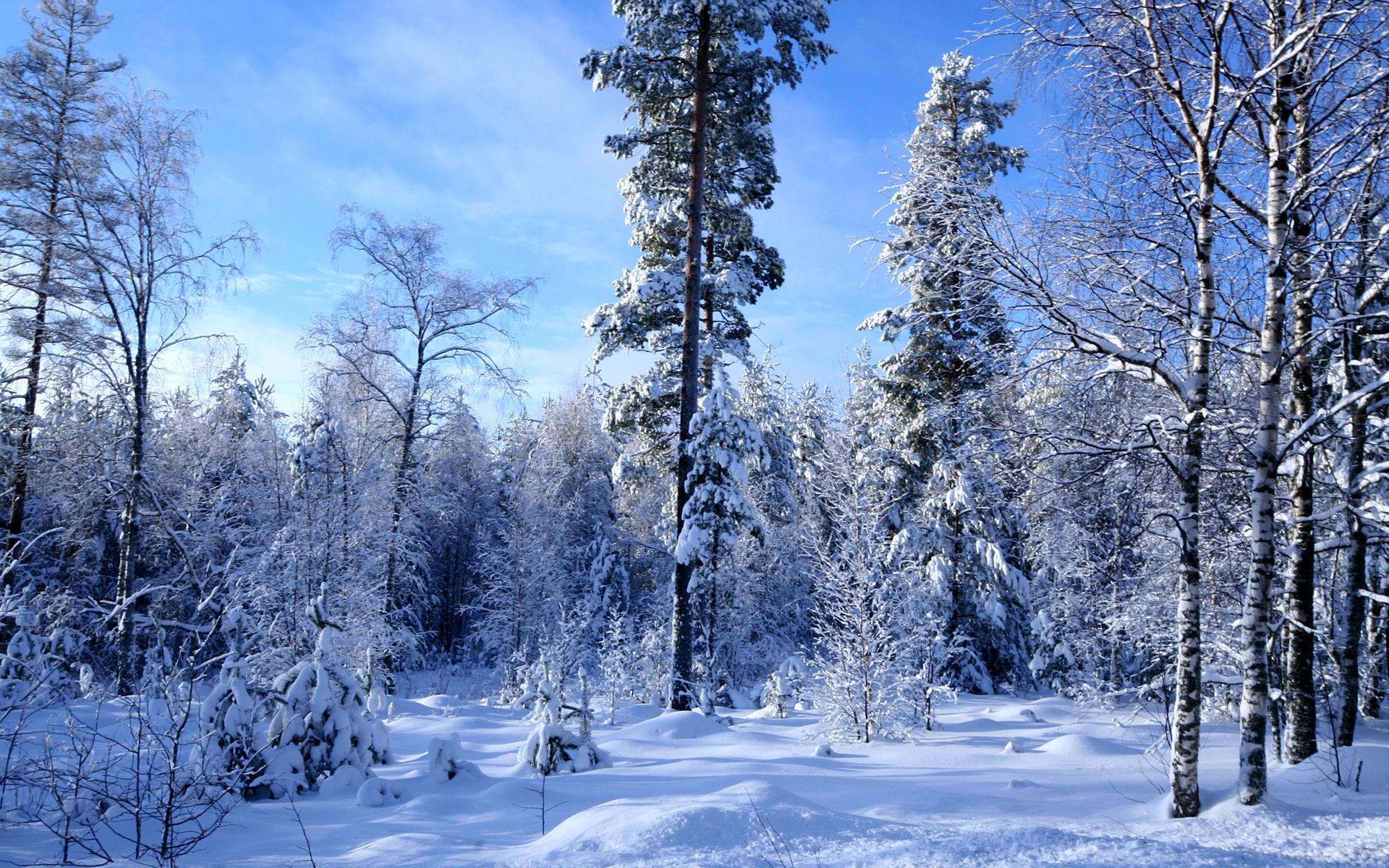 Картинки с высоким разрешением-зимний лес