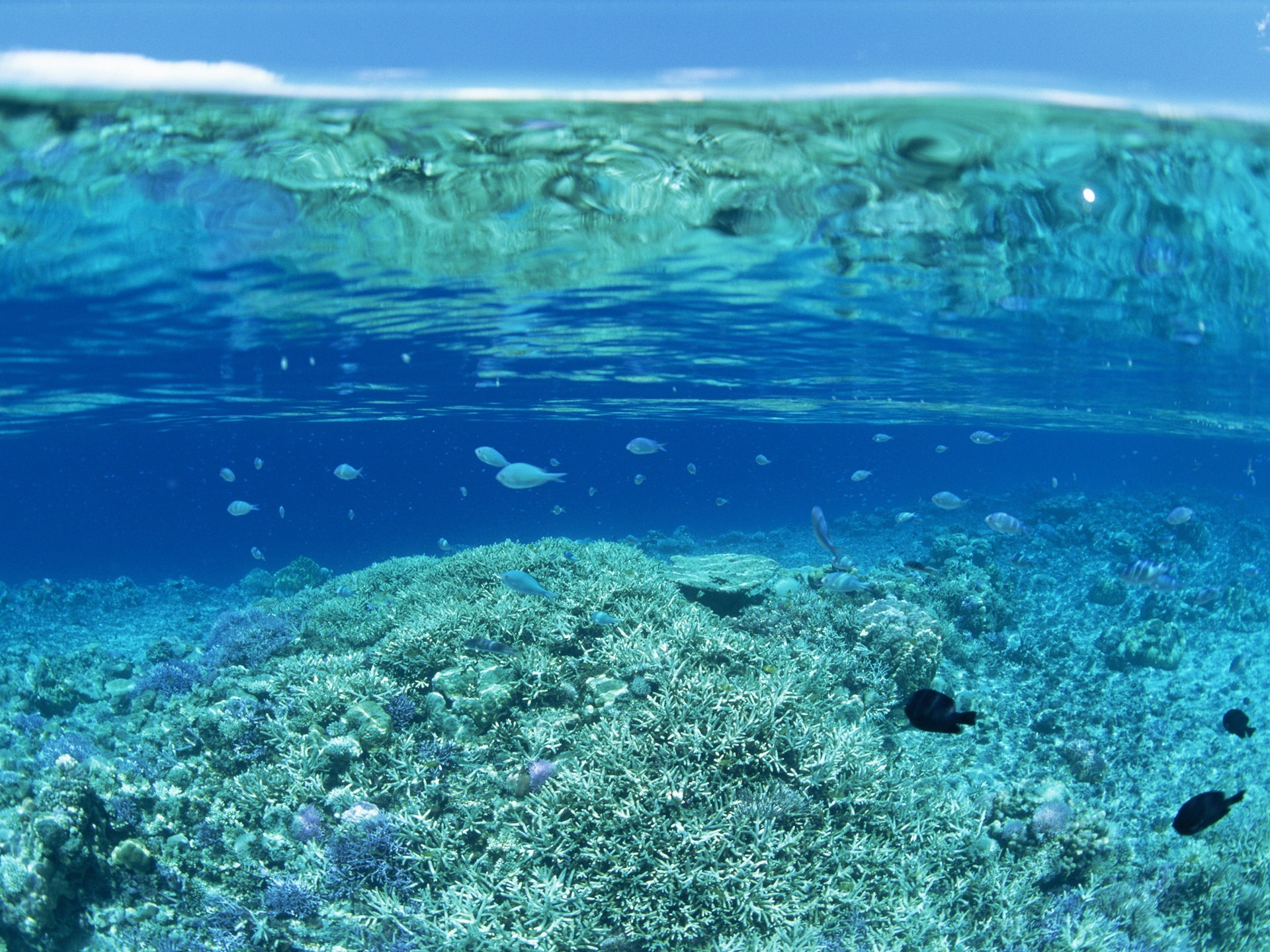 переспала картинки под водой высокого качества тумба