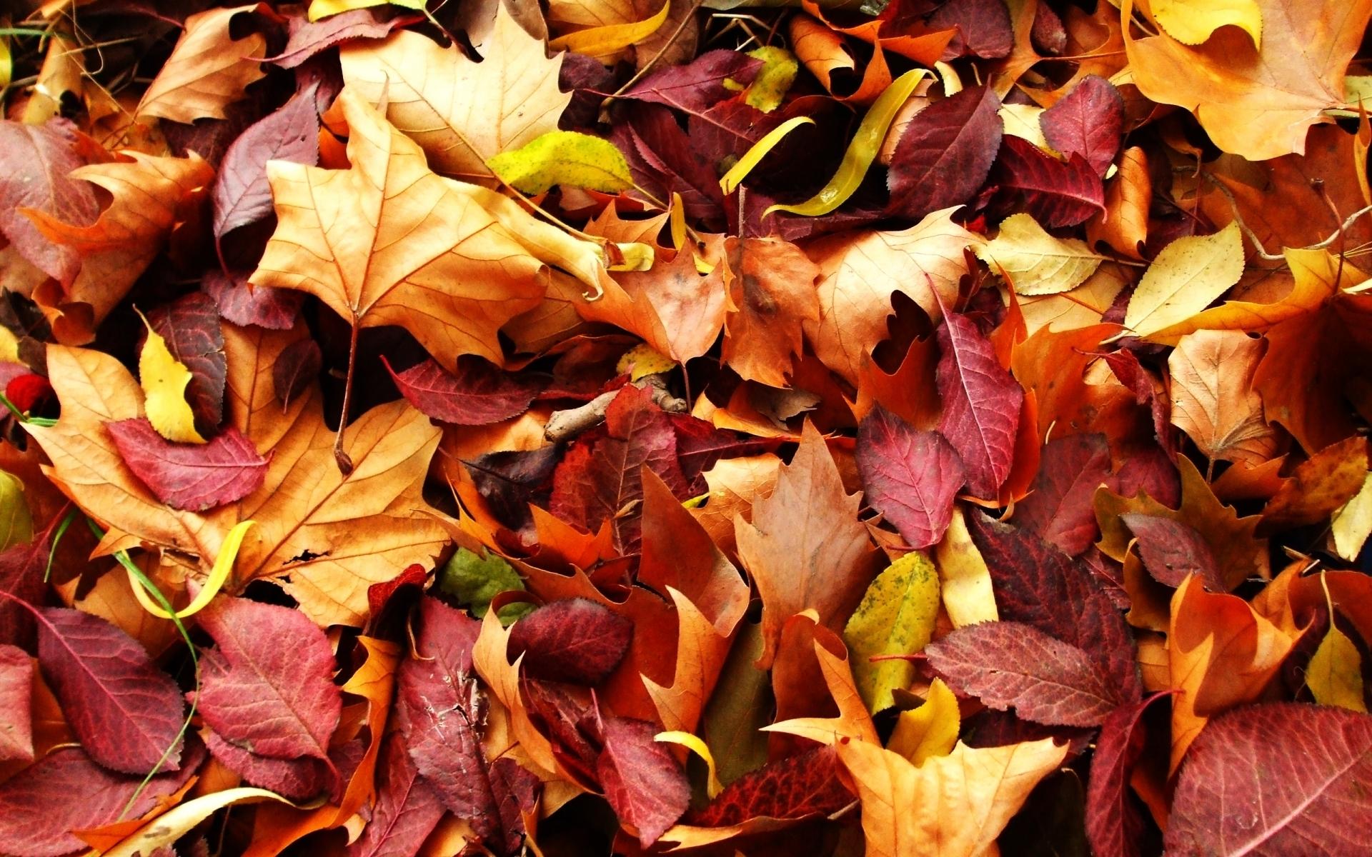 получения выгоды картинки листья опадают листья сожалению, как это