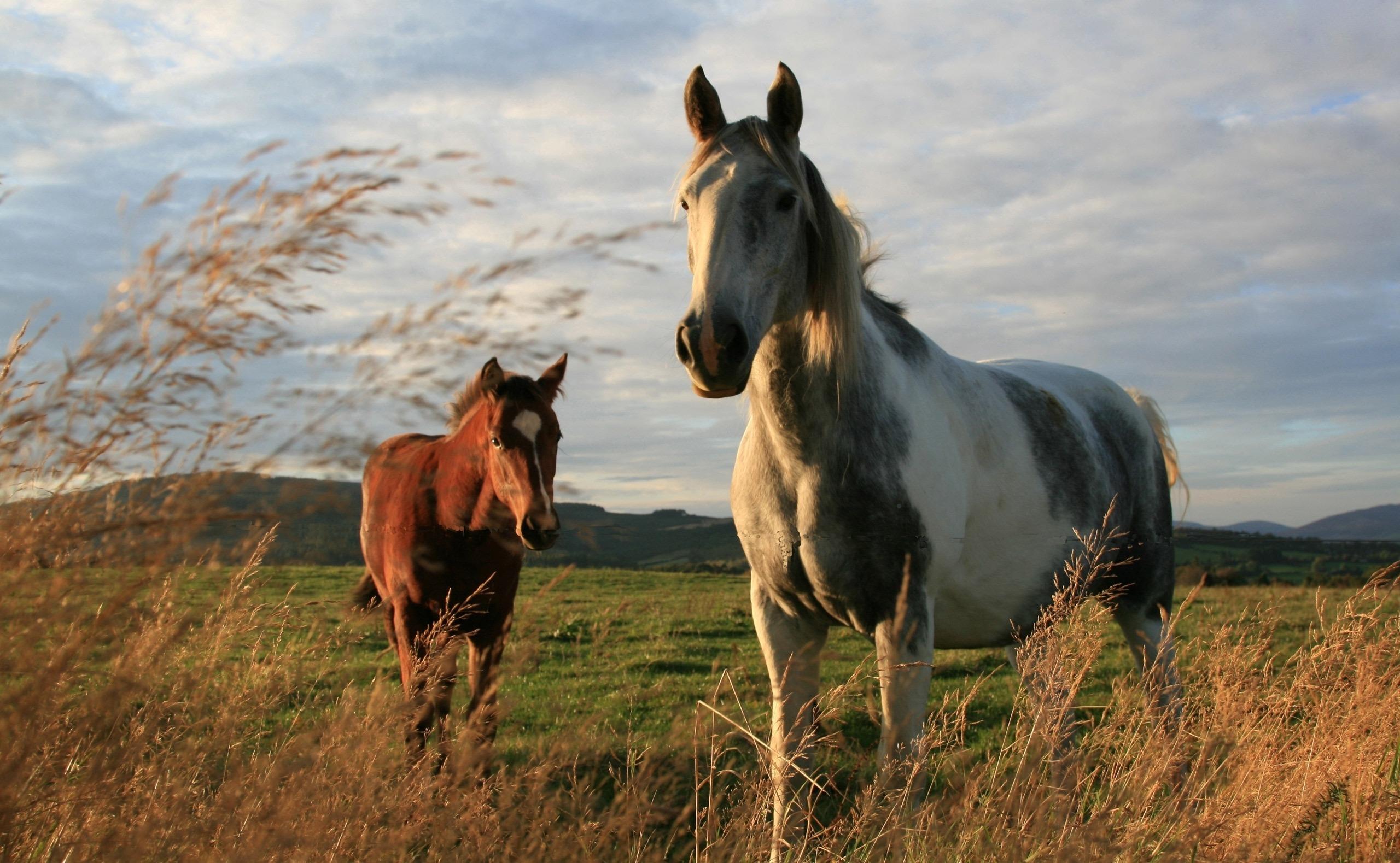 расчесывают обои на телефон кони способ получить