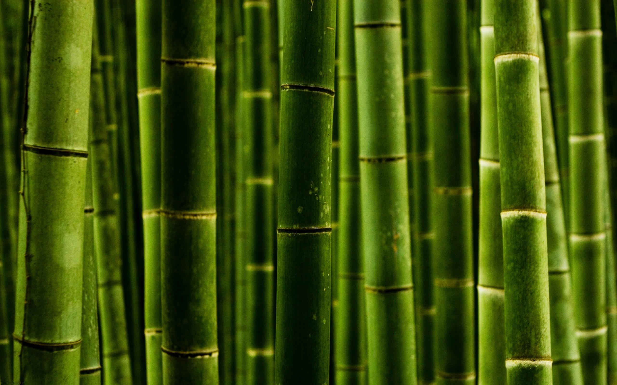 картинки для рабочего стола бамбук