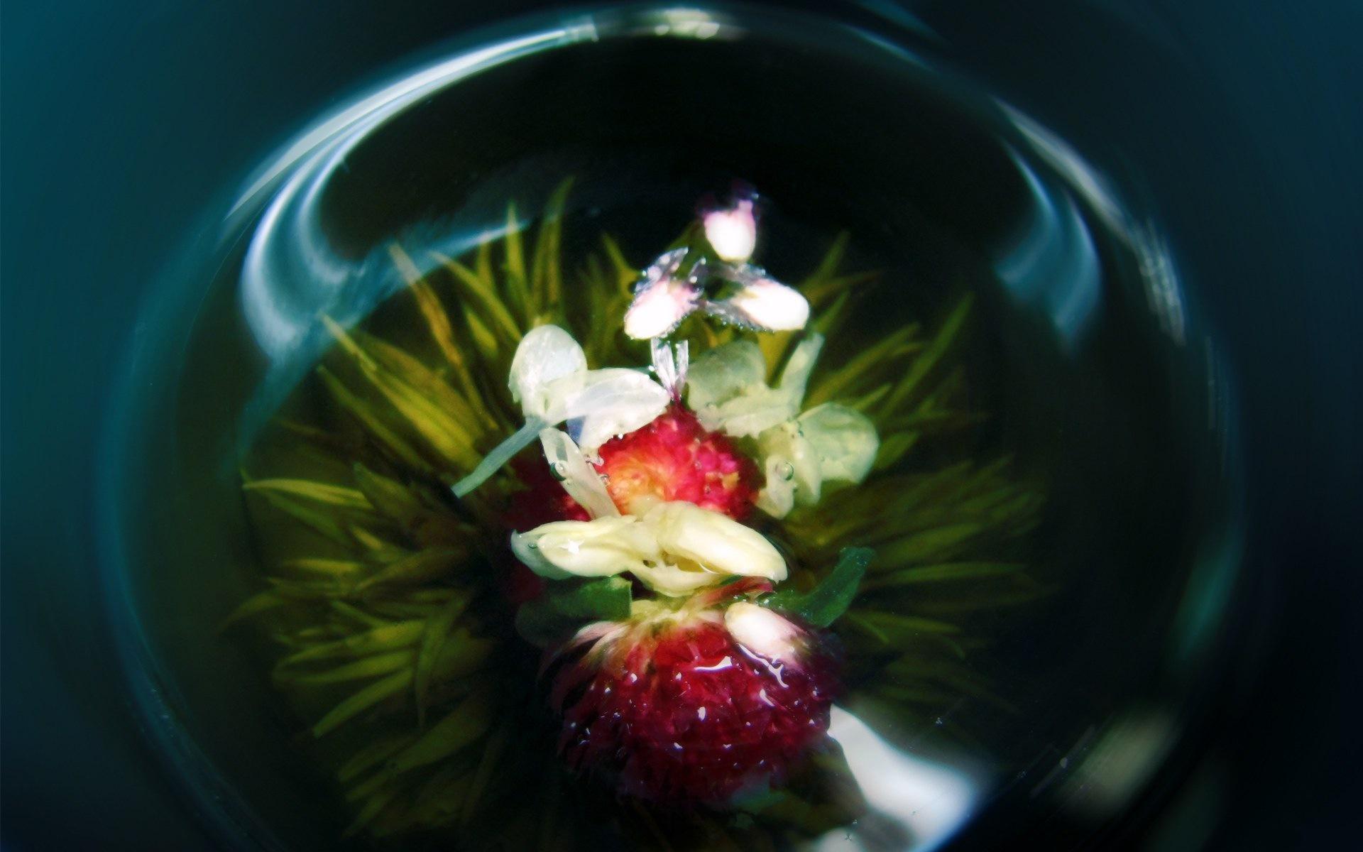 картинки на рабочий стол стеклянные цветы родители уславливаются