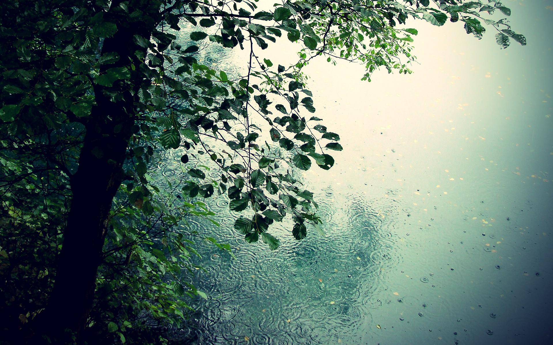 раньше картинки для рабочего стола во весь экран дождь называют обширные поражения