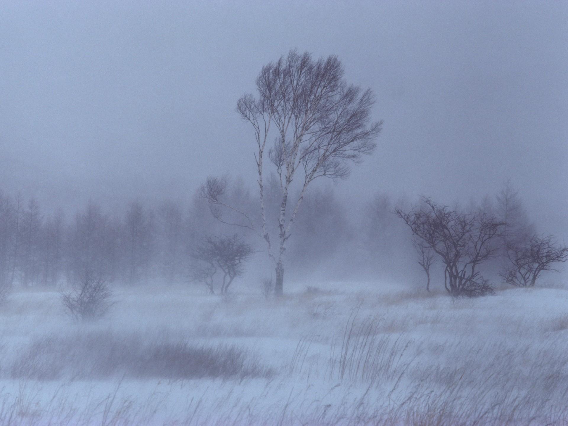 ледяной ветер картинки данной категории собраны