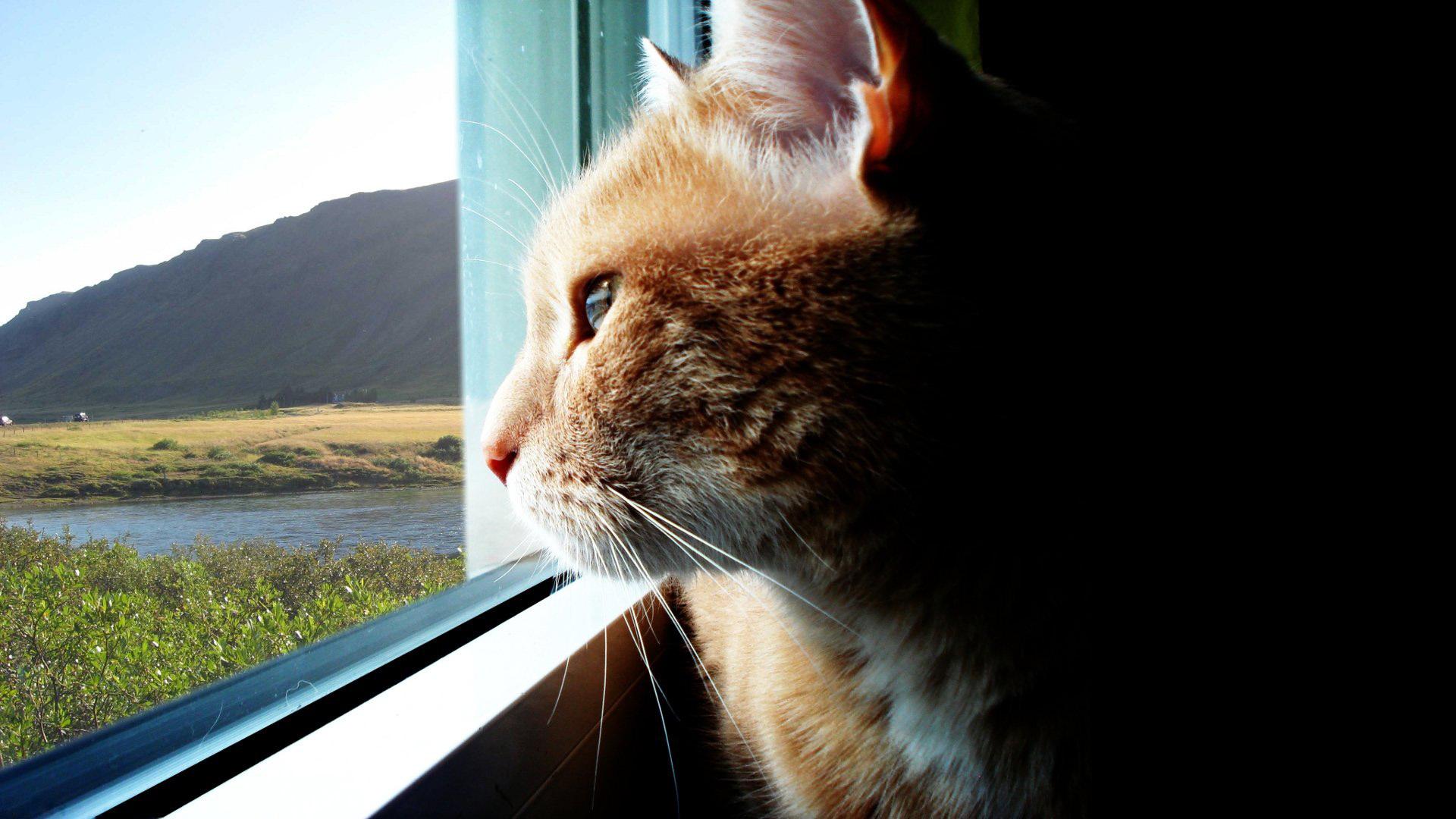 орехи пекан кот смотрит в даль картинки перед