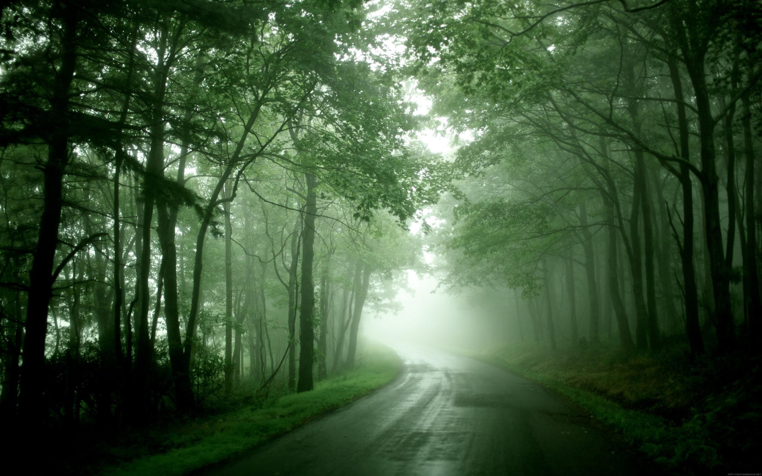 Дождь лес обои на рабочий стол