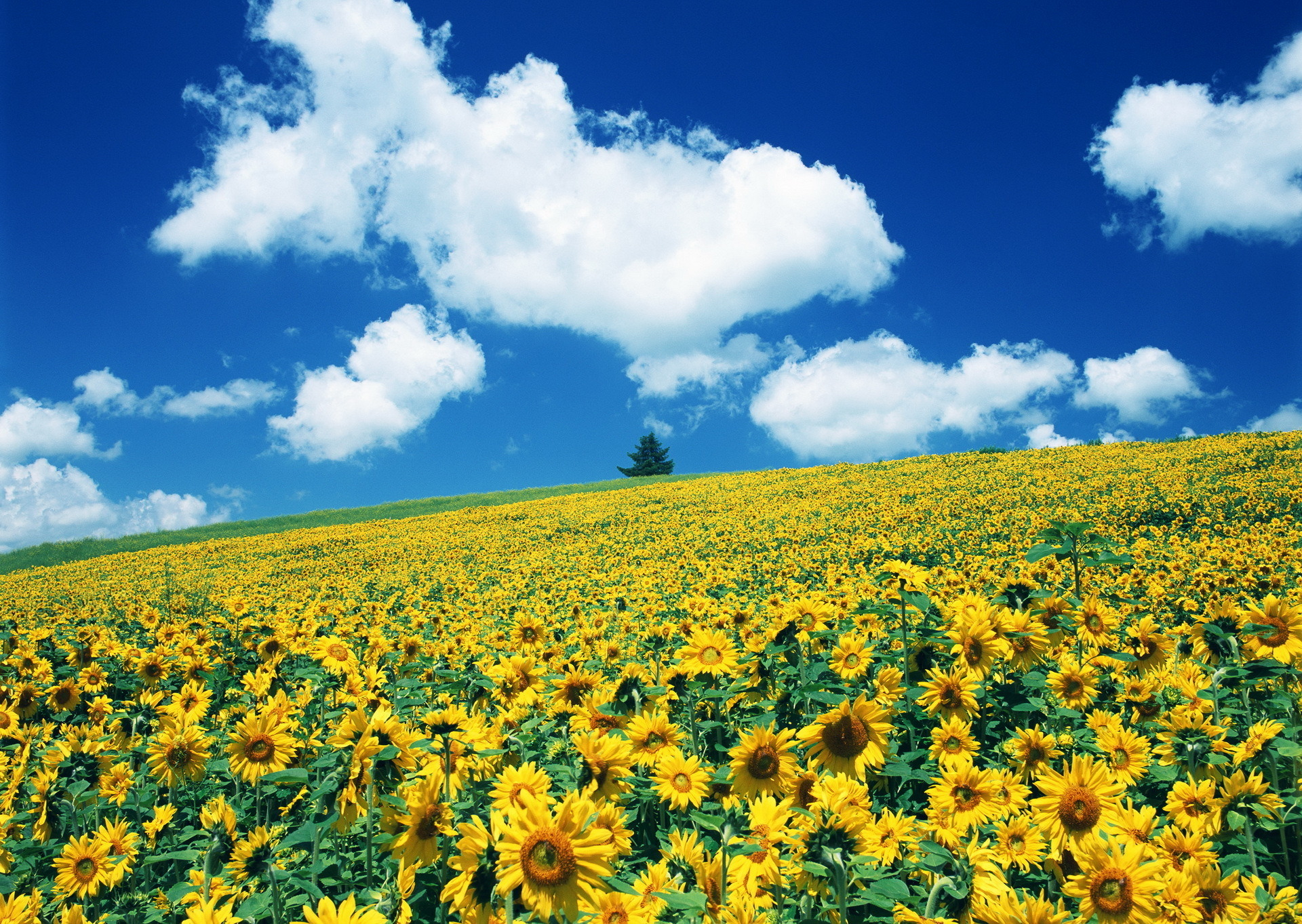 картинка природа украины летом фотографиях