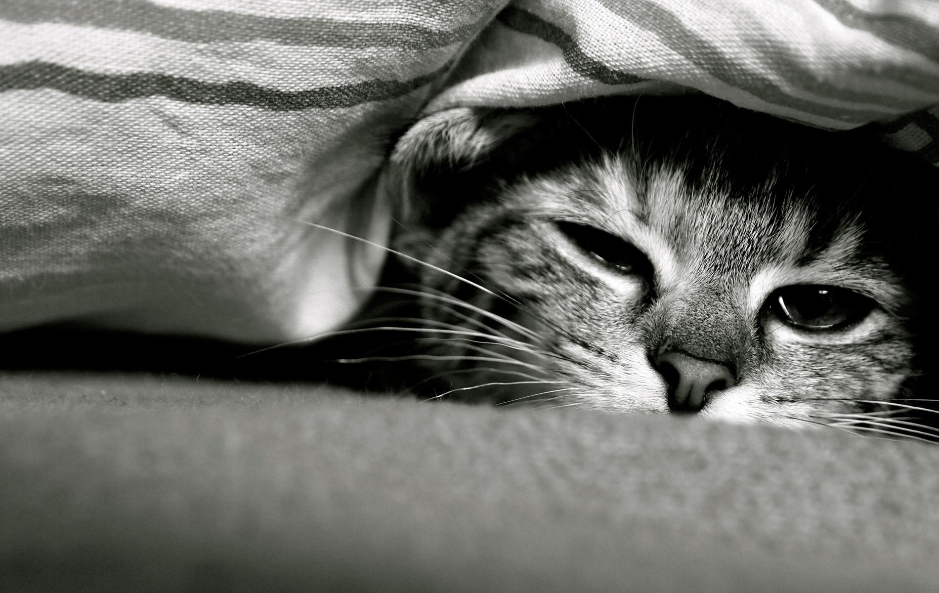 Картинка грусти котята