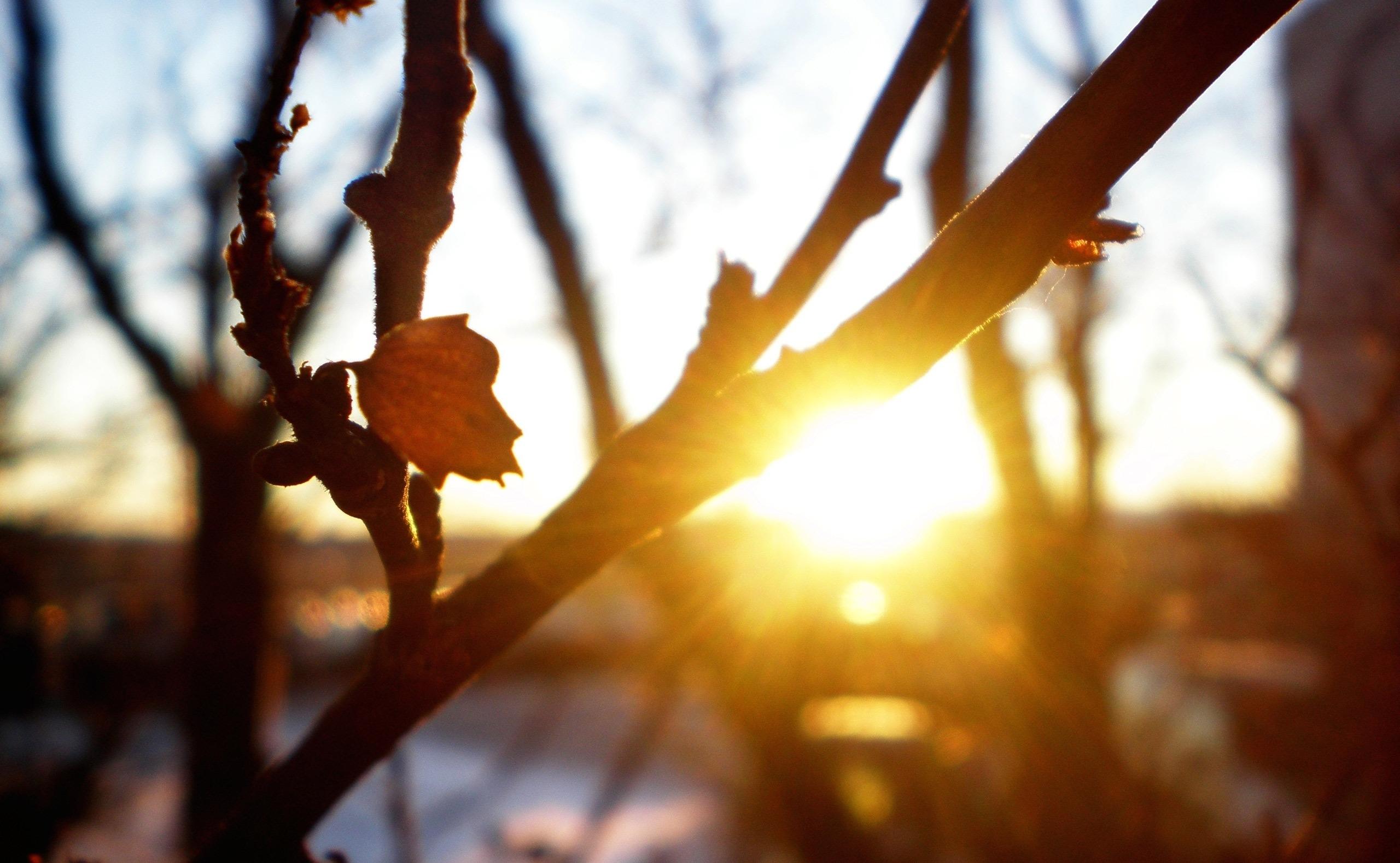 картинка на рабочий стол солнце и природа пробуждается ото сна что