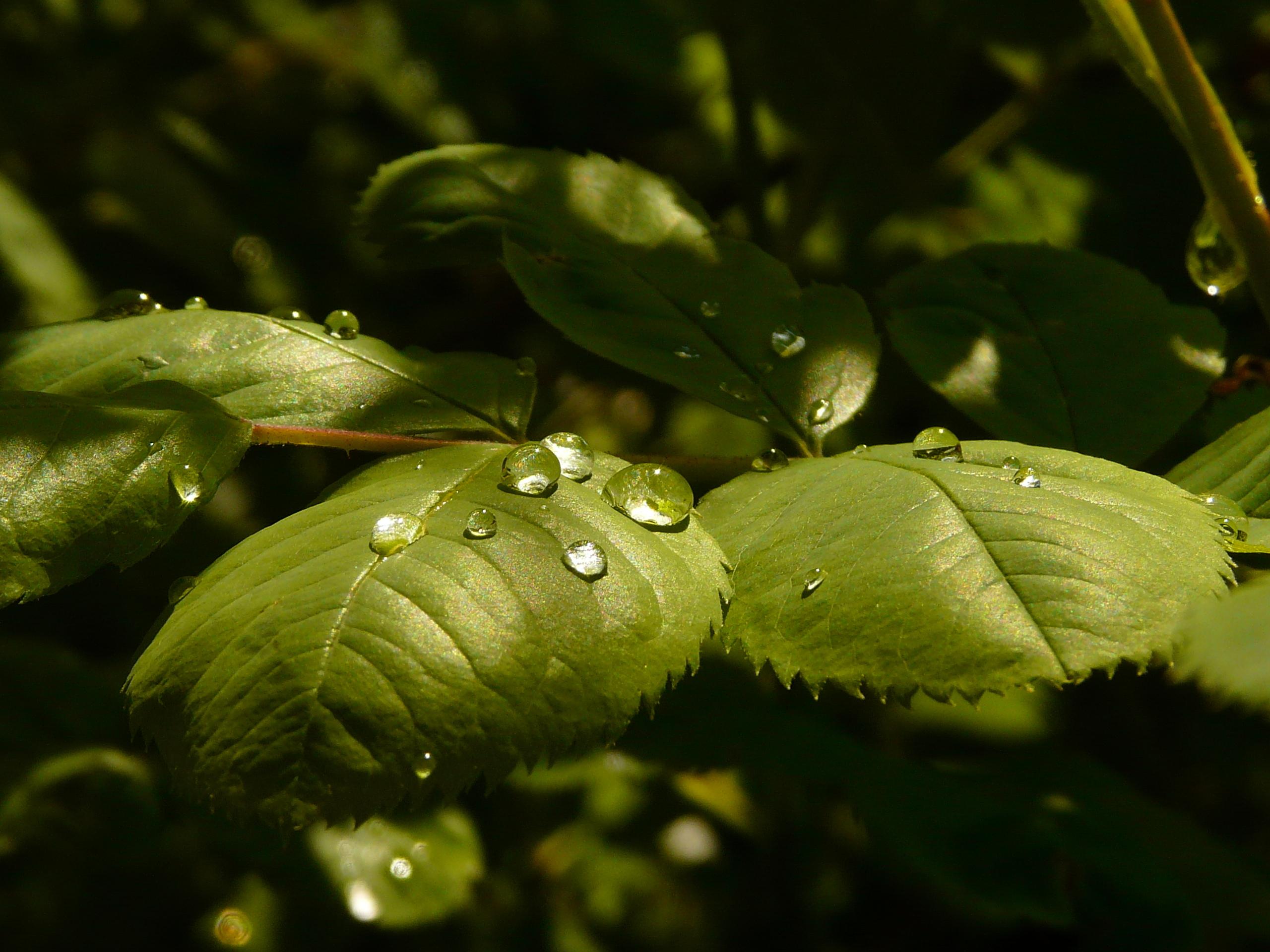будущим картинки с каплями на растении подойдет сапогам-ботфортам