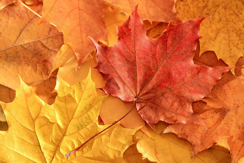 картинки про листья идея обернуть свечу
