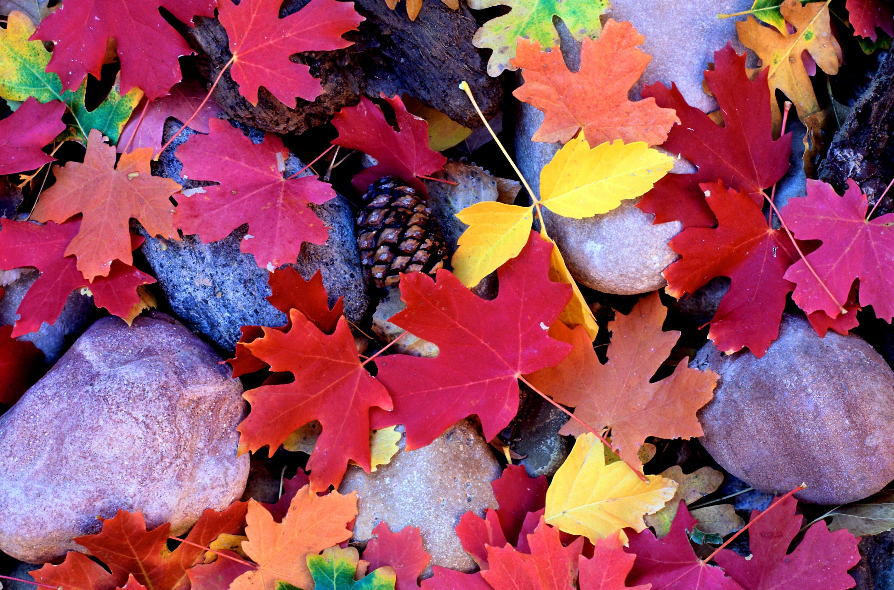 Яркие картинки сентября