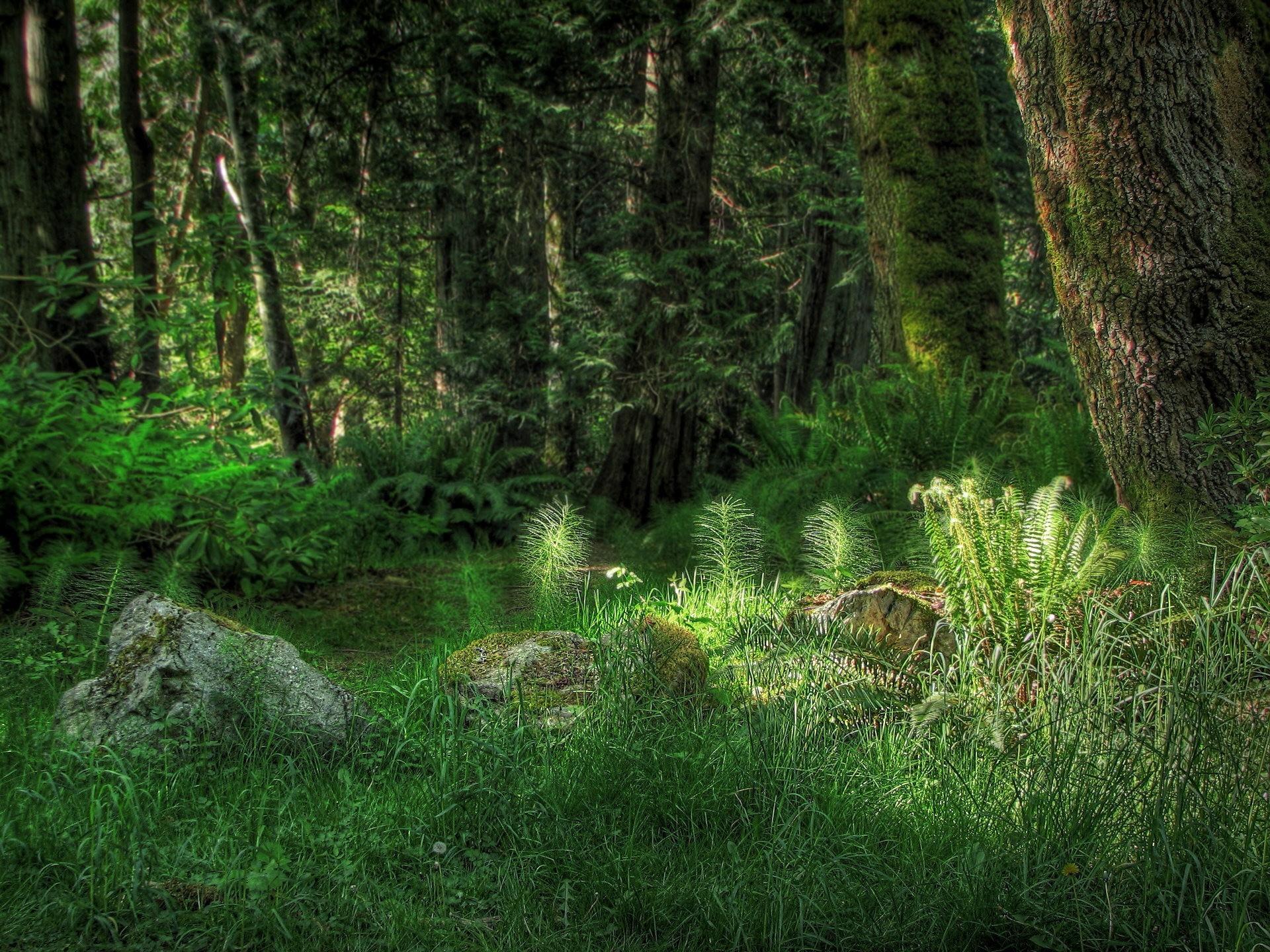 Сказочный еловый лес картинки