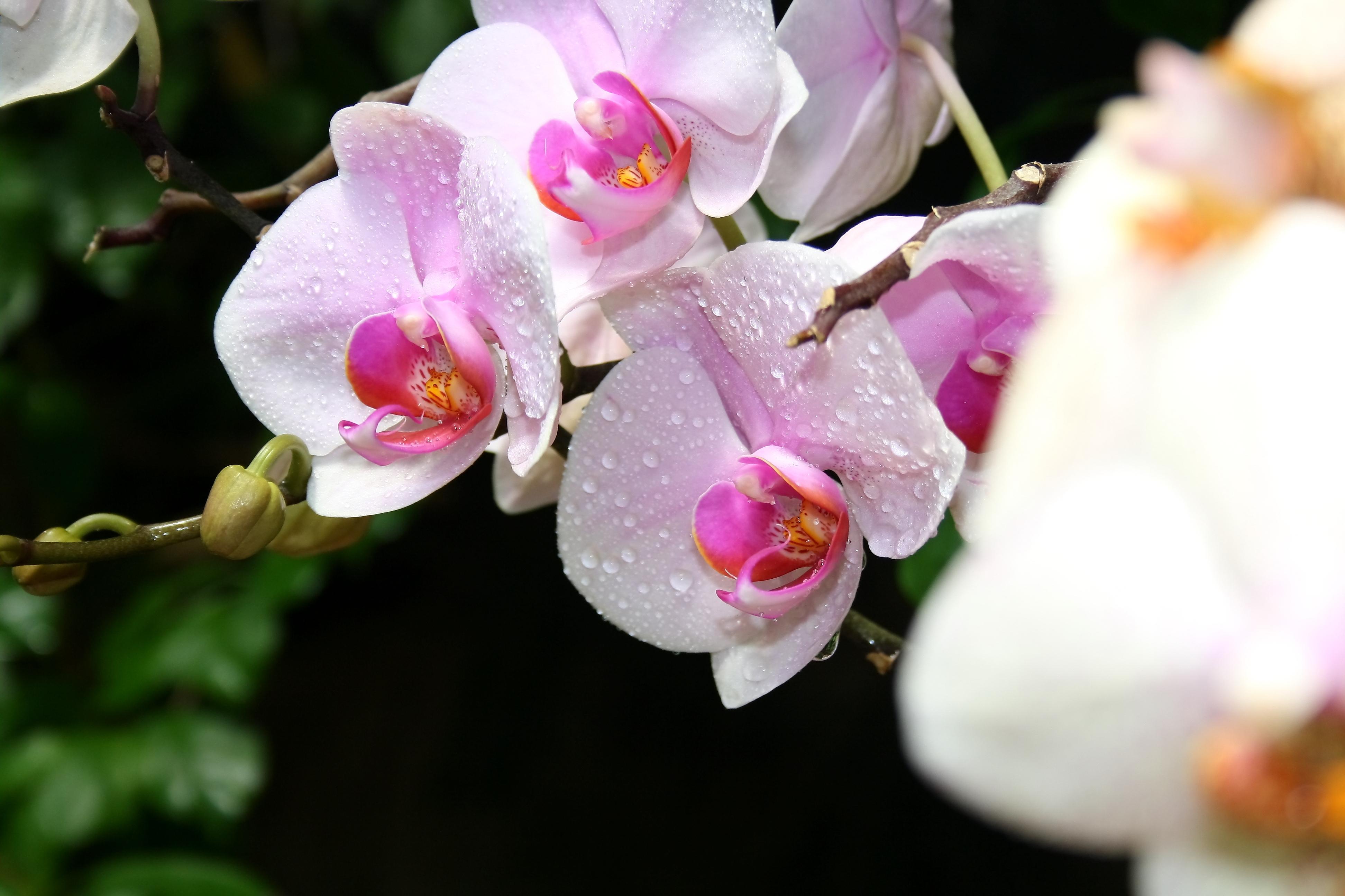 Букет цветов с кольцом фото этом