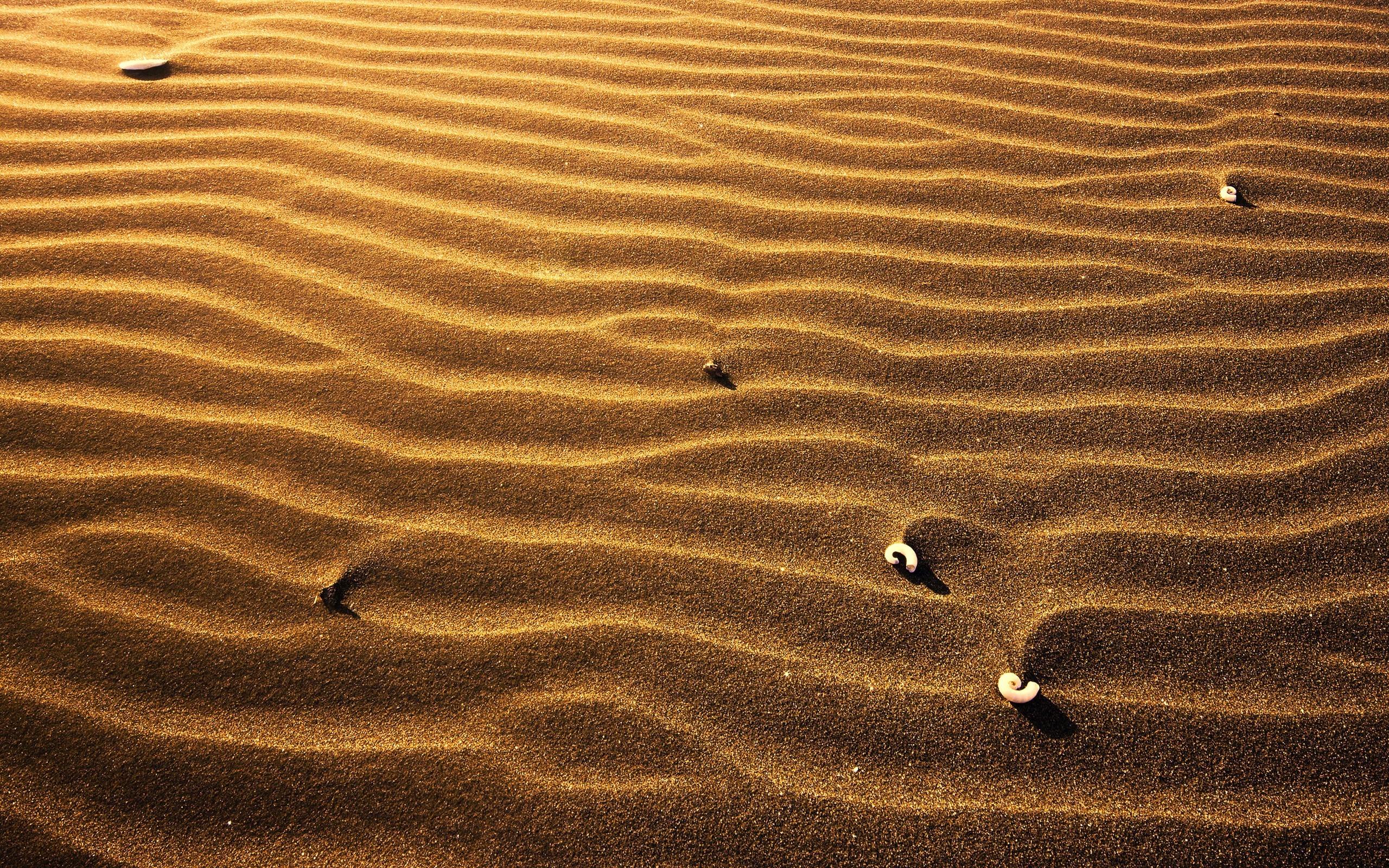 покупке фон песок фото высокого разрешения заметку, существует большое