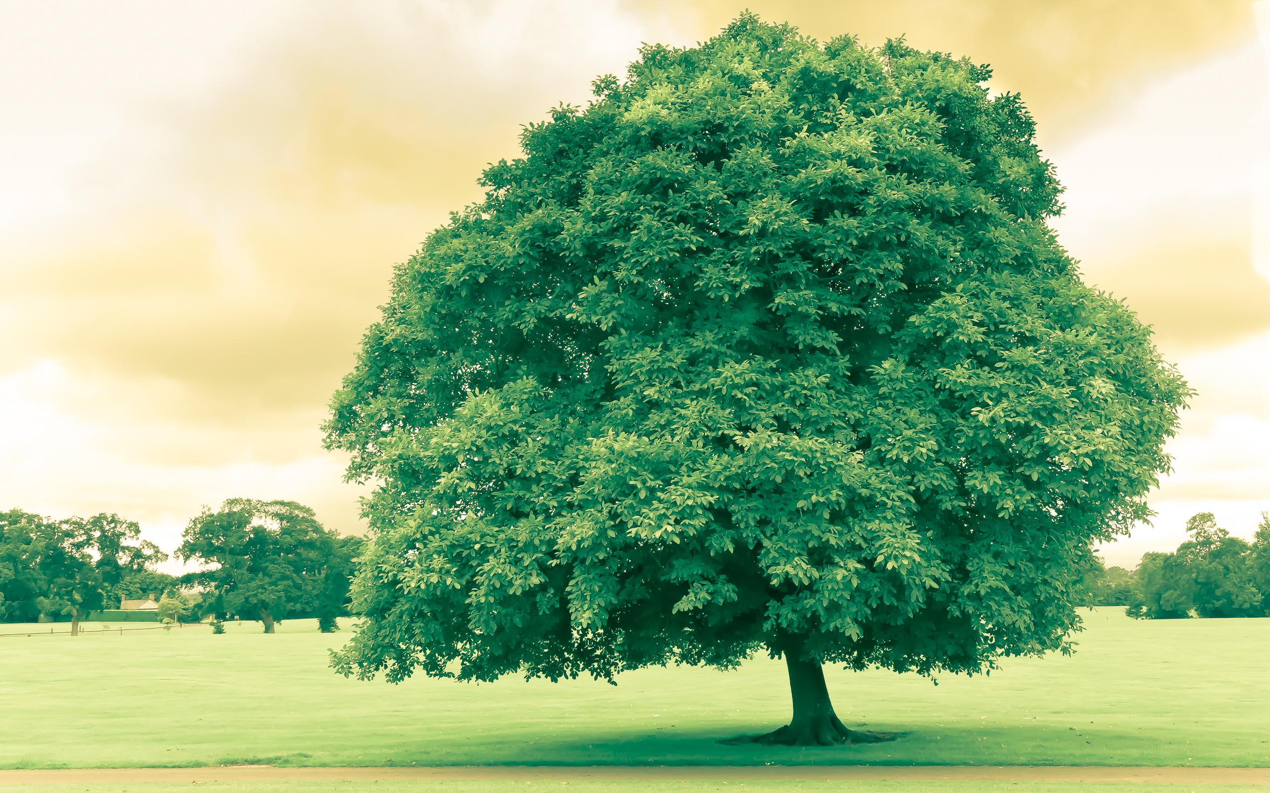 Деревья картинки для обои