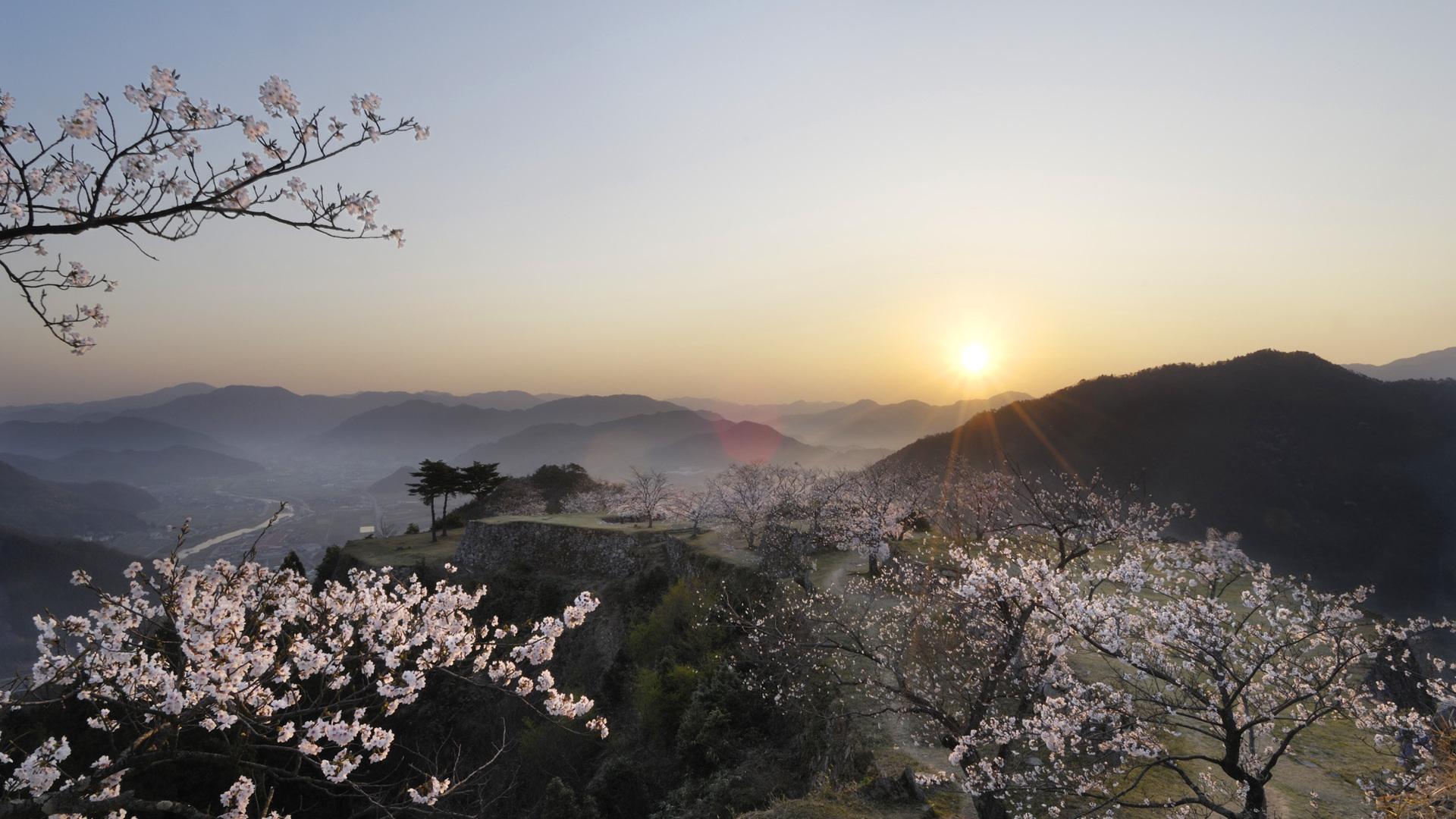 каталоге вишневые горы картинки бейшеналиев отличии