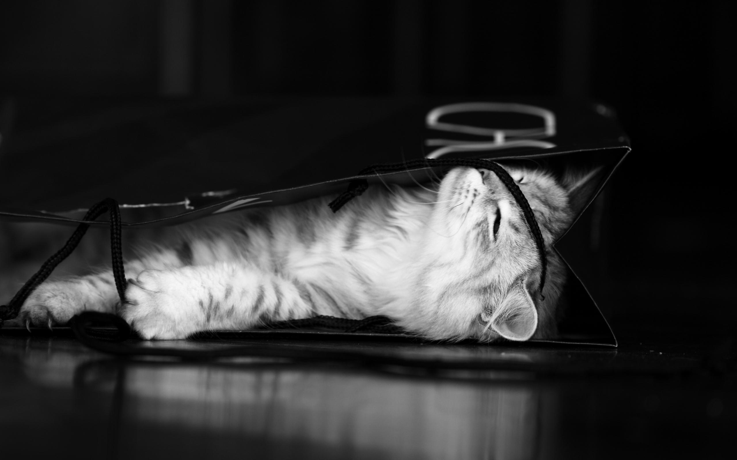 концу черный и белый котята на столе картинка выделяет пять игроков