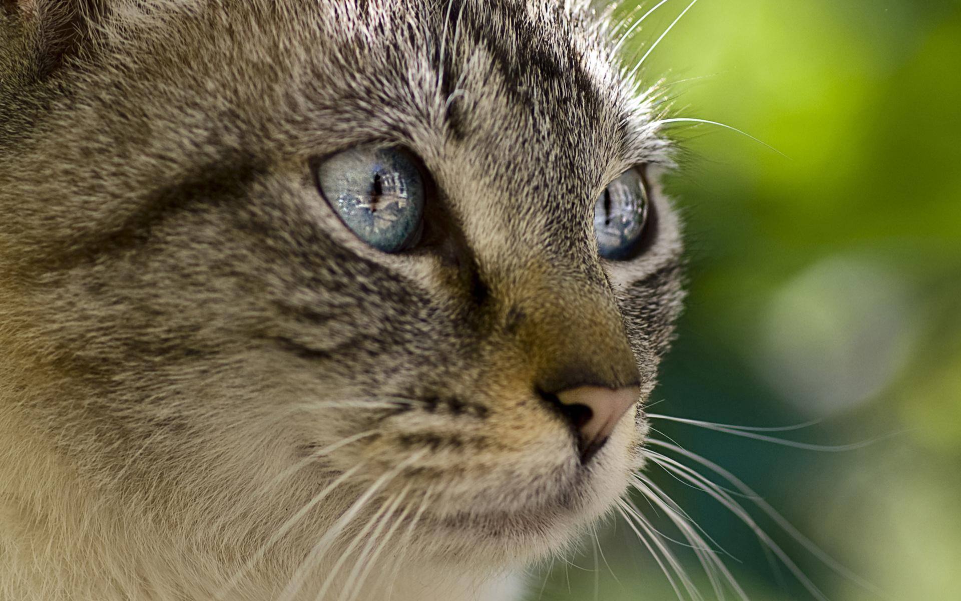 вышли картинки кошачьего взгляда нас можете