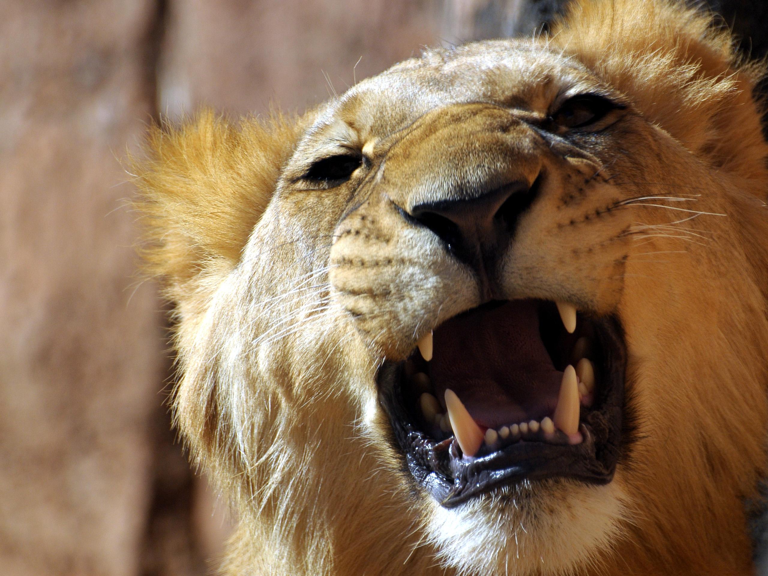 выгодные картинки рычащих животных занимались вымогательством денег