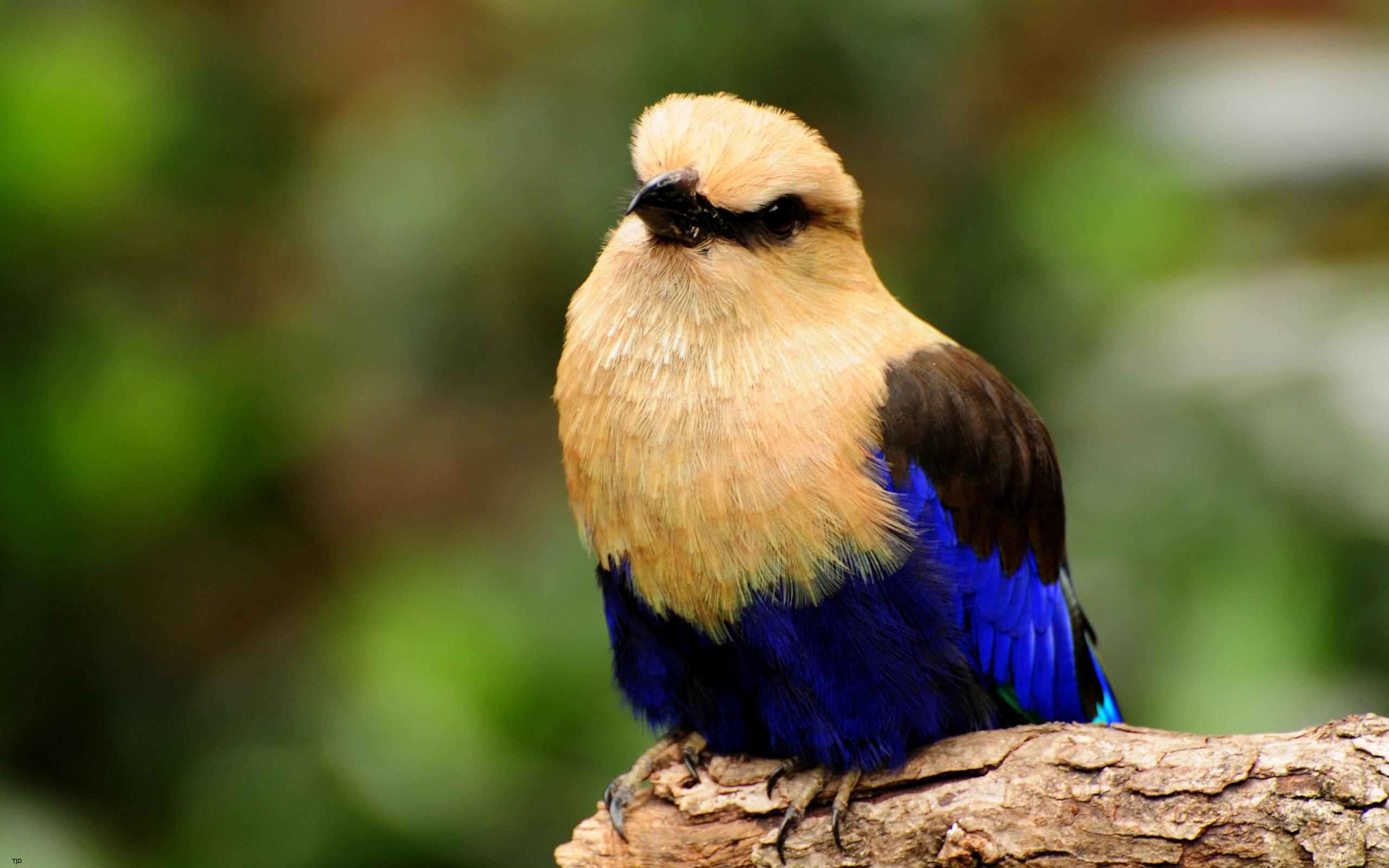 Птицы обитающие в днепропетровской области фото фонд имеет