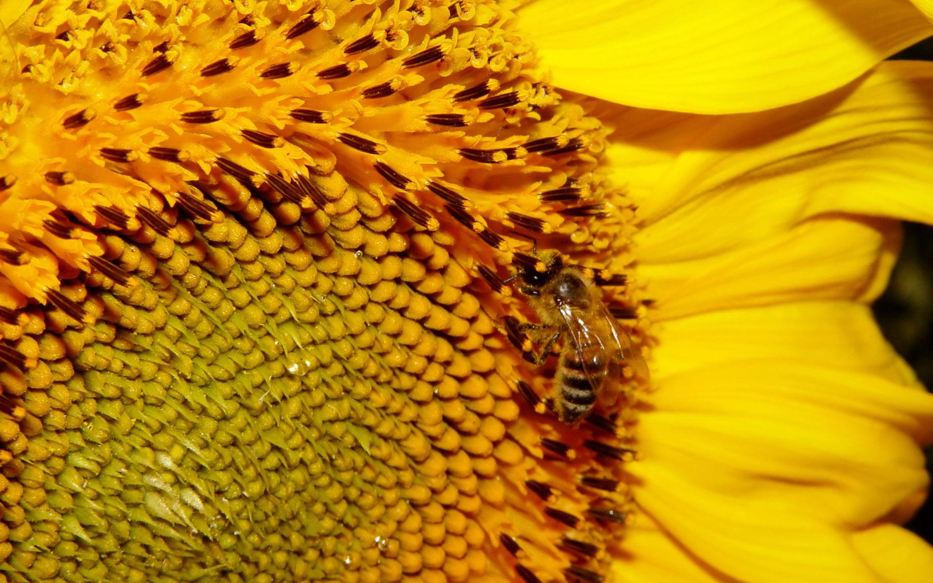 картинки для рабочего стола с пчелами