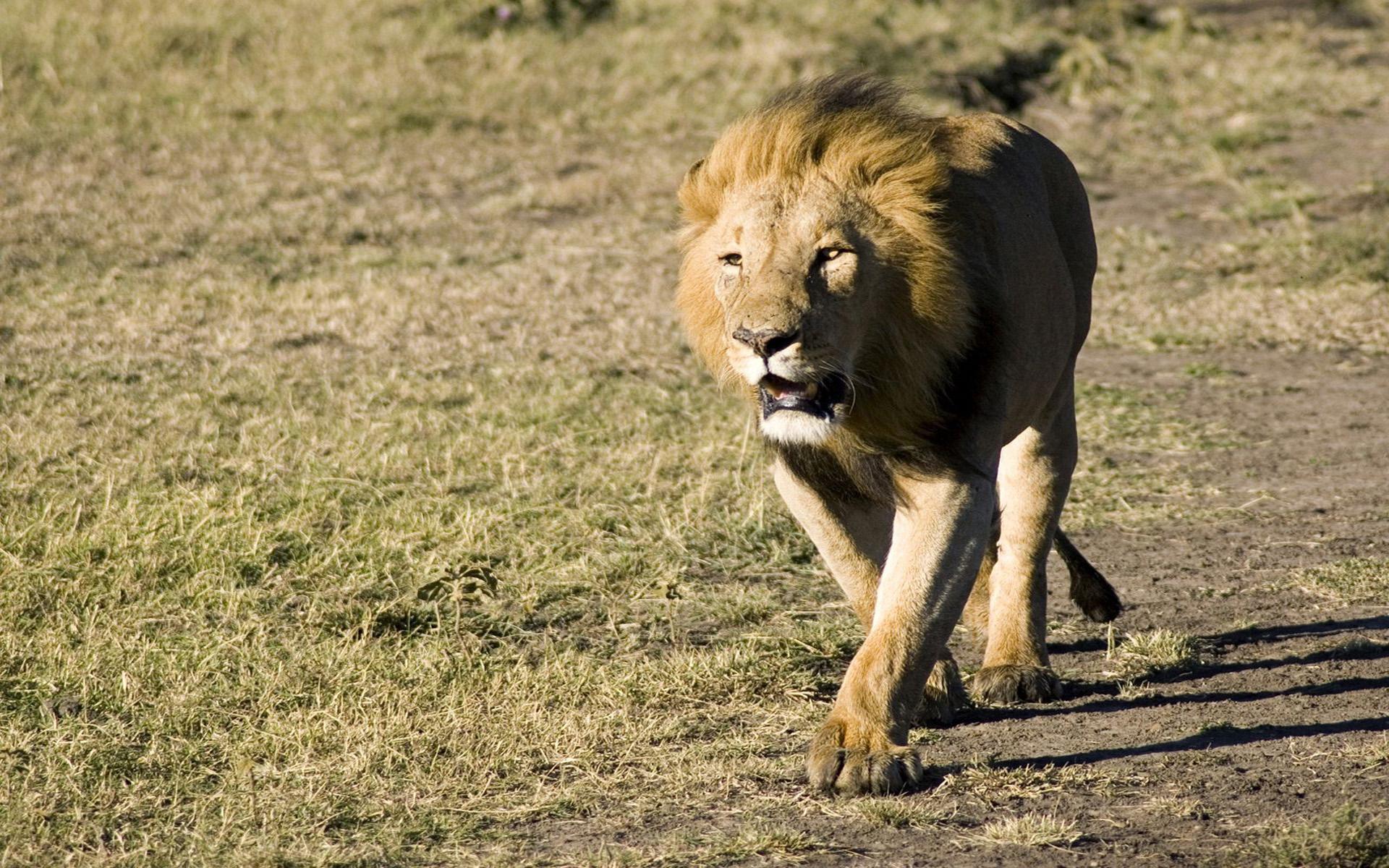 картинка идущего животного как