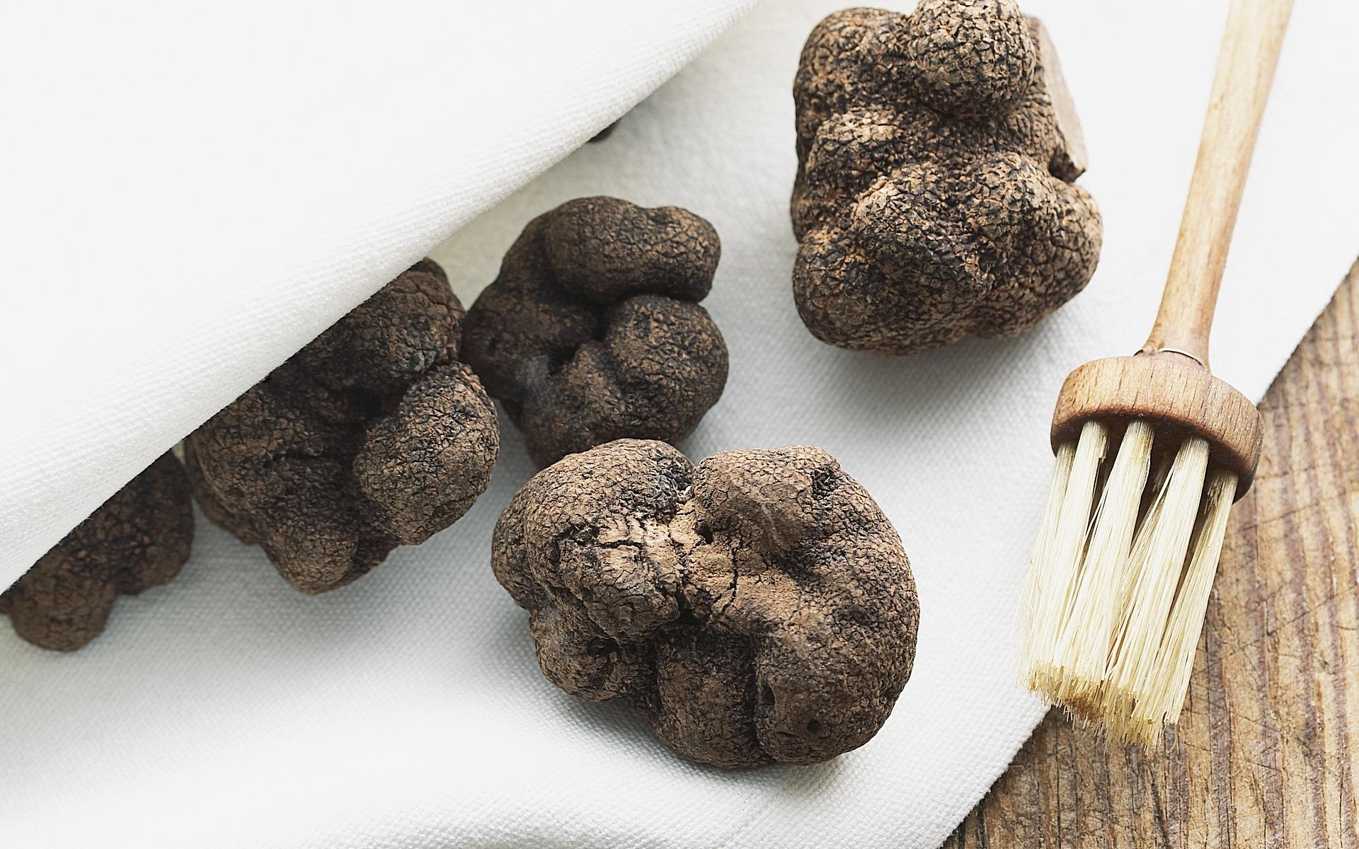 Трюфель картинки грибов