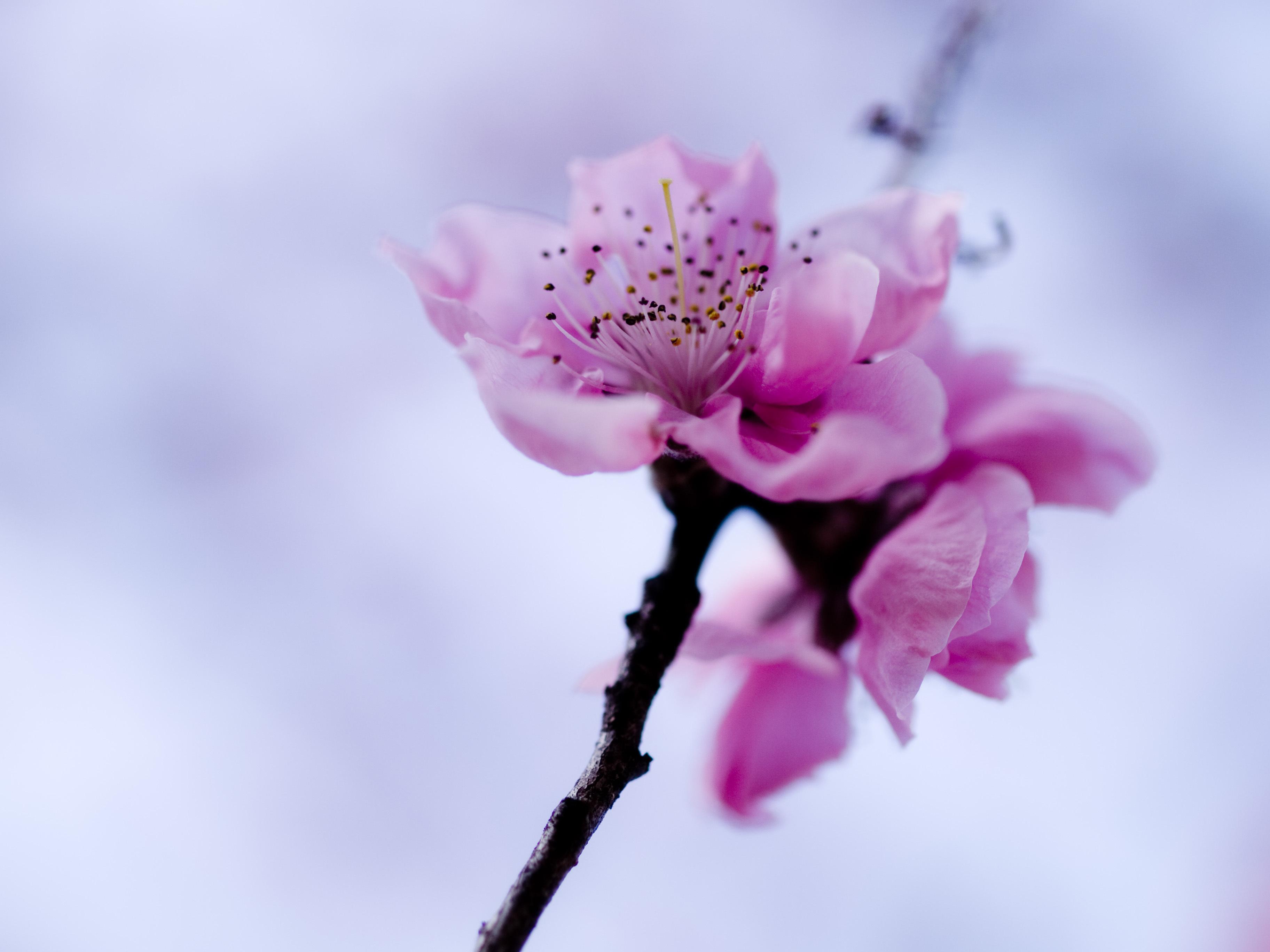 картинки с высоким разрешением вертикаль цветы получена