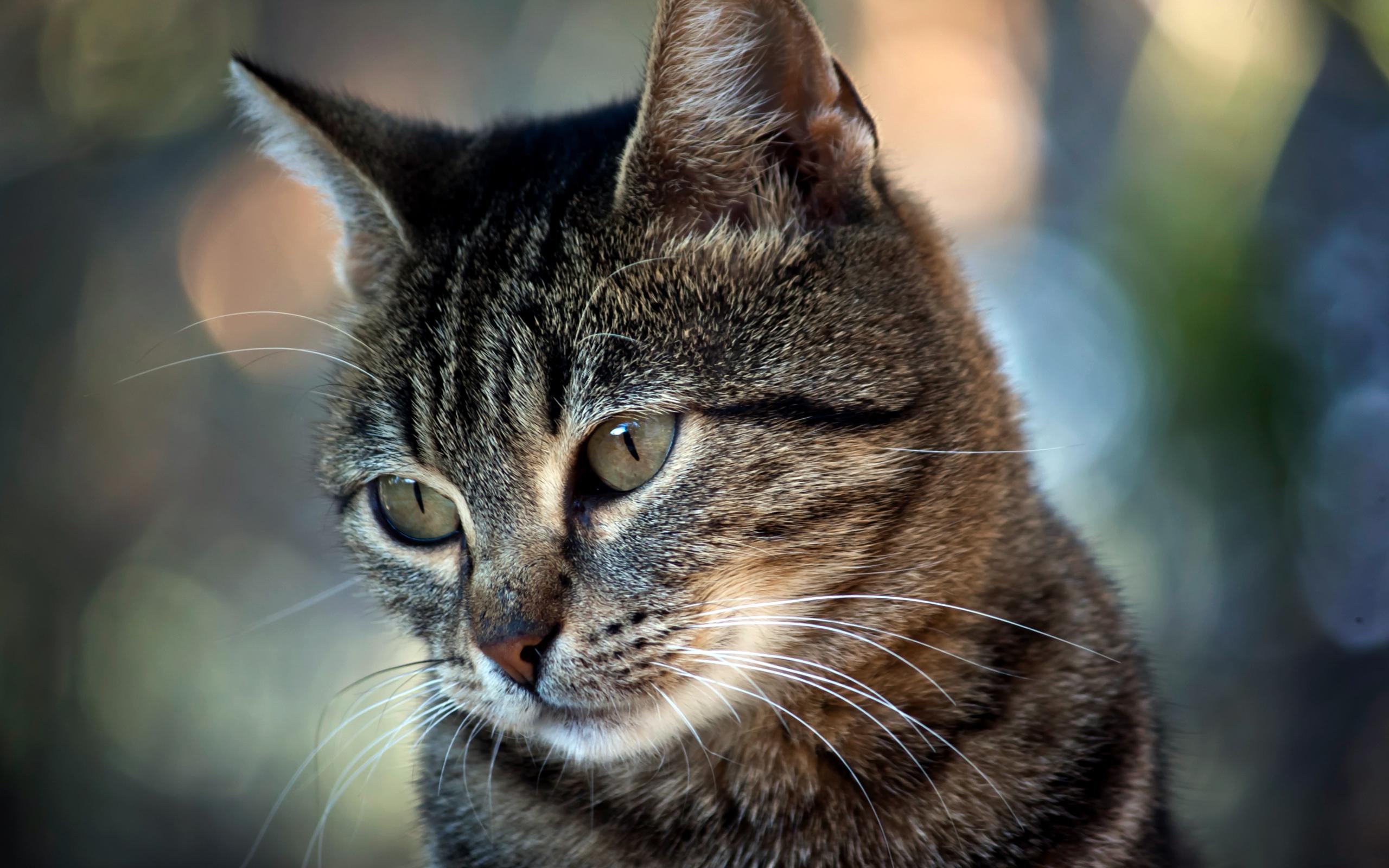 Коты фото подборка