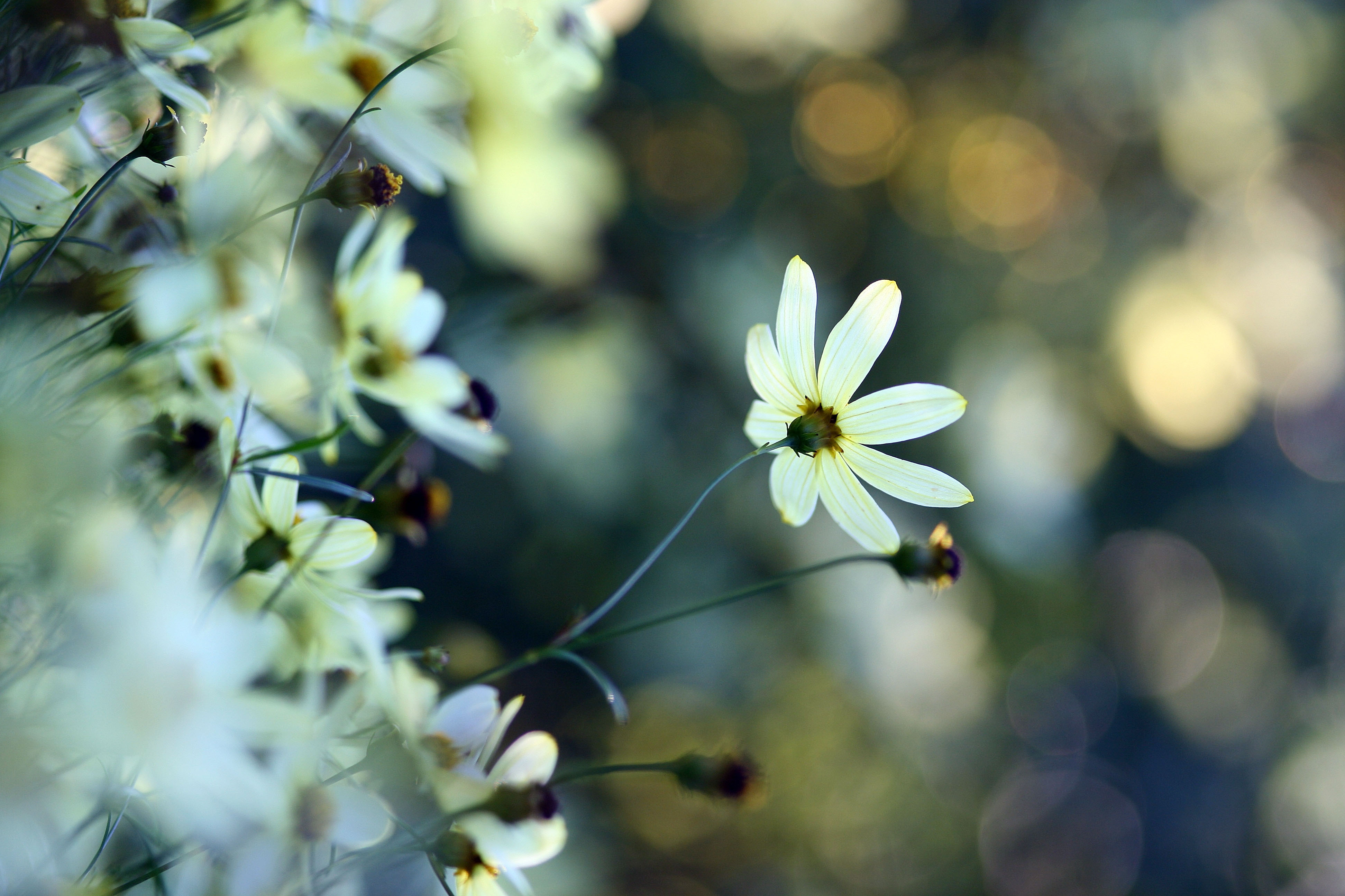 самом картинки с высоким разрешением вертикаль цветы натуральными
