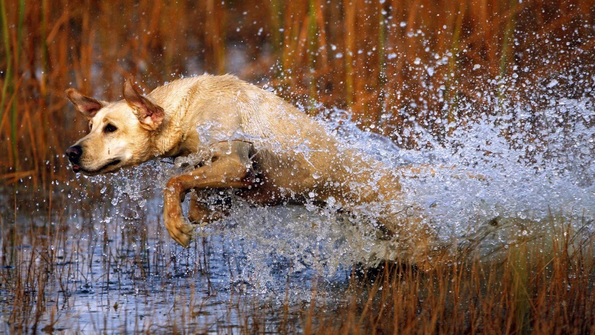 Красивые фотографии охоты для рабочего стола рассматриваемая