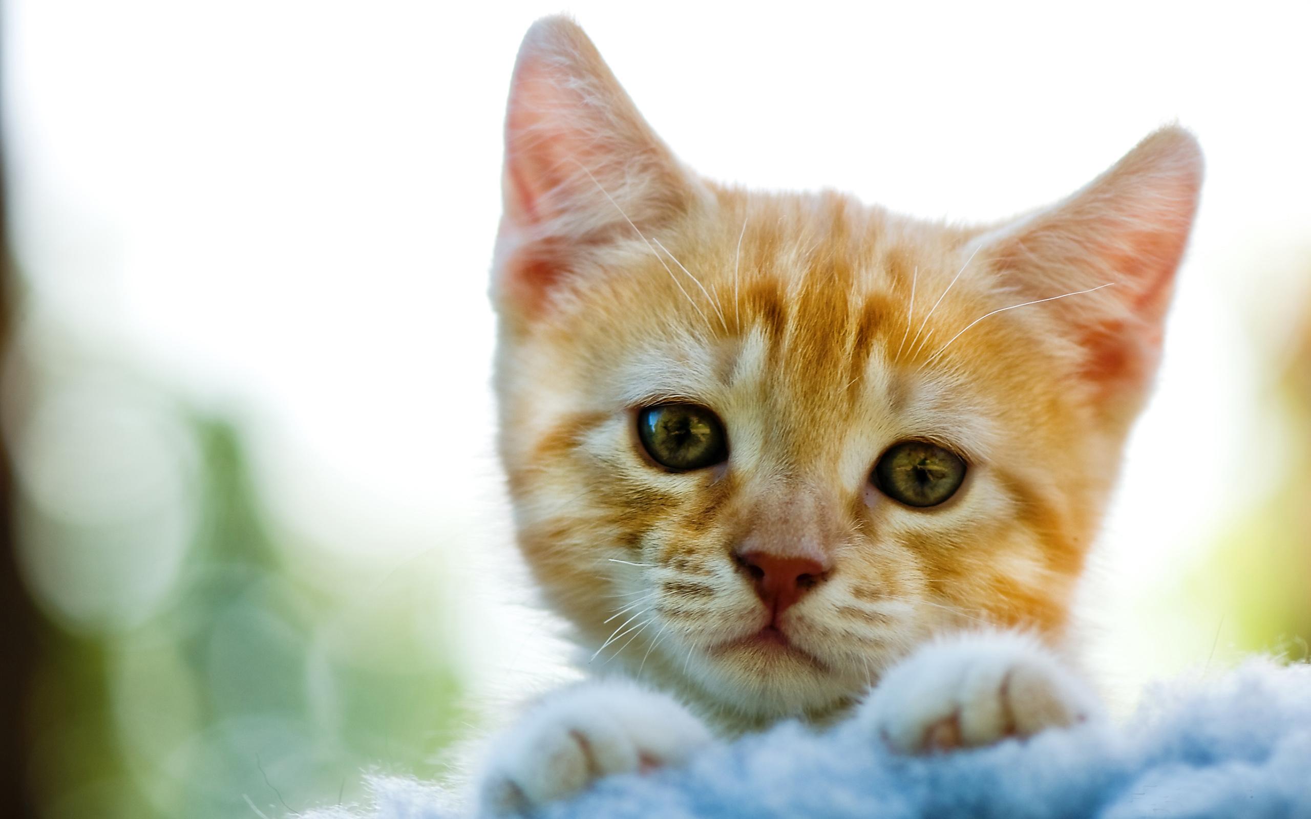 Рыжий грустный кот скачать
