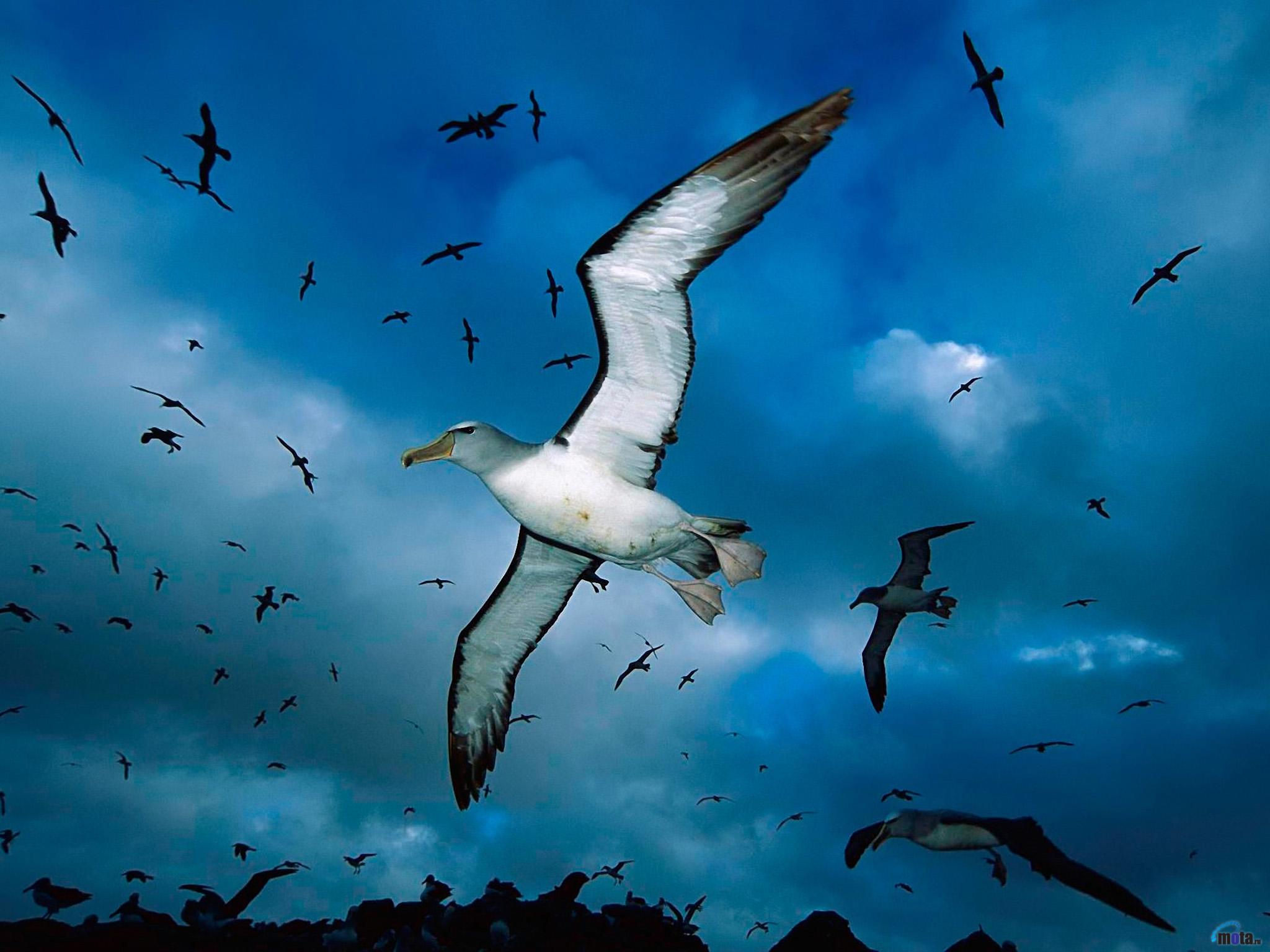 защитить картинки летящих птиц это лучше