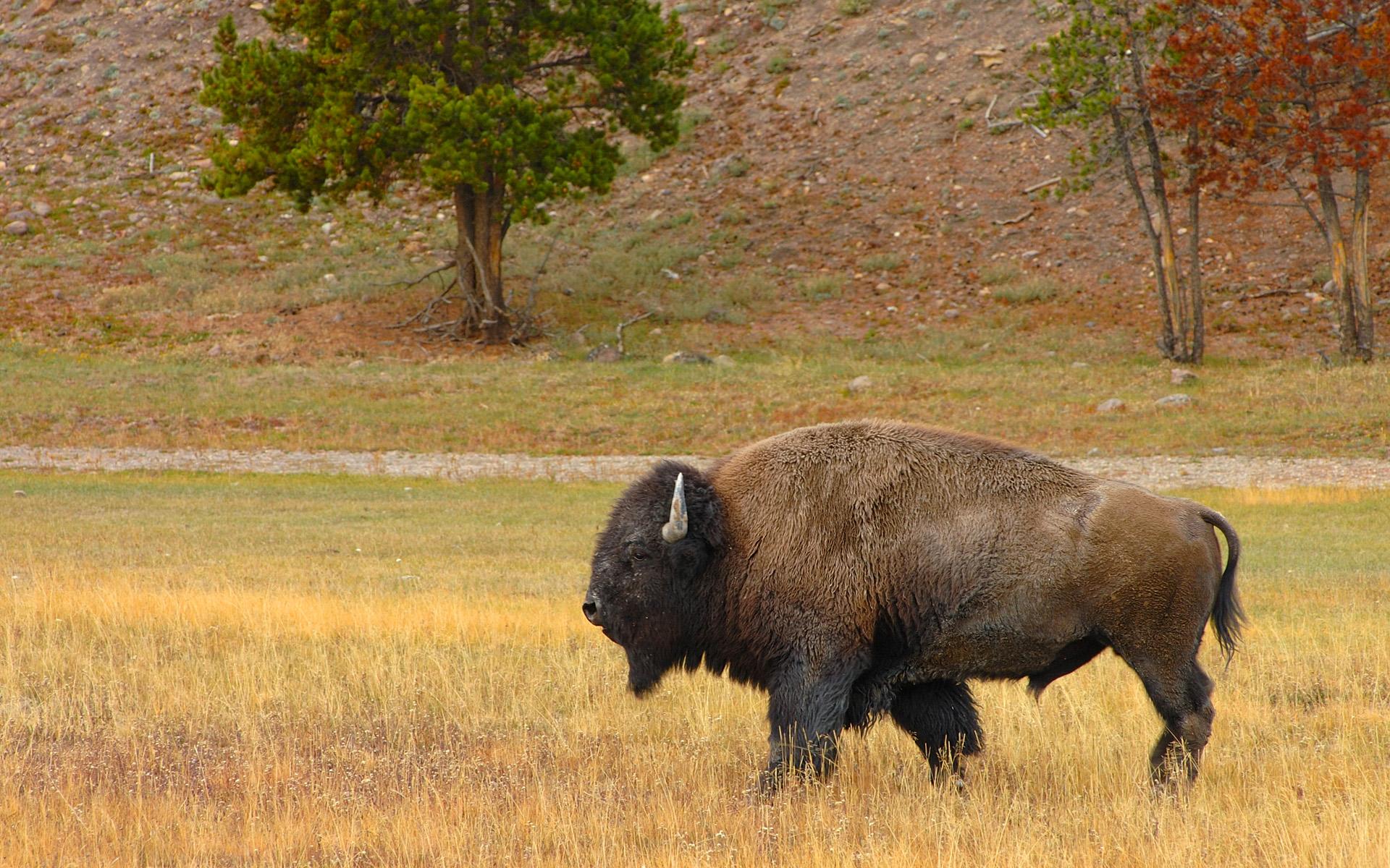 сказали что фотографии животных северной америки выглядят крупные высокие
