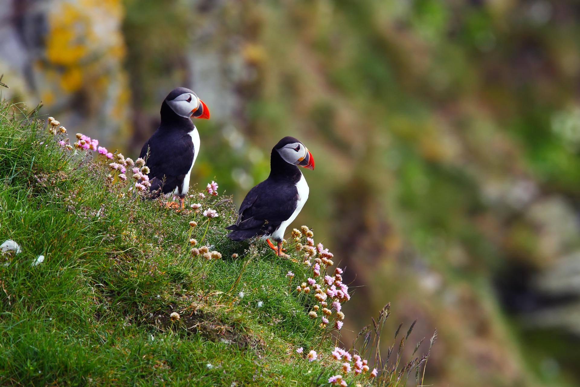 картинки животных птичек крышу для беседки