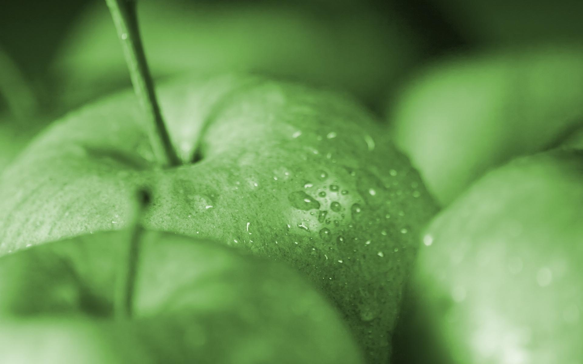 эти бега картинки на рабочий стол с зеленым цветом тебя