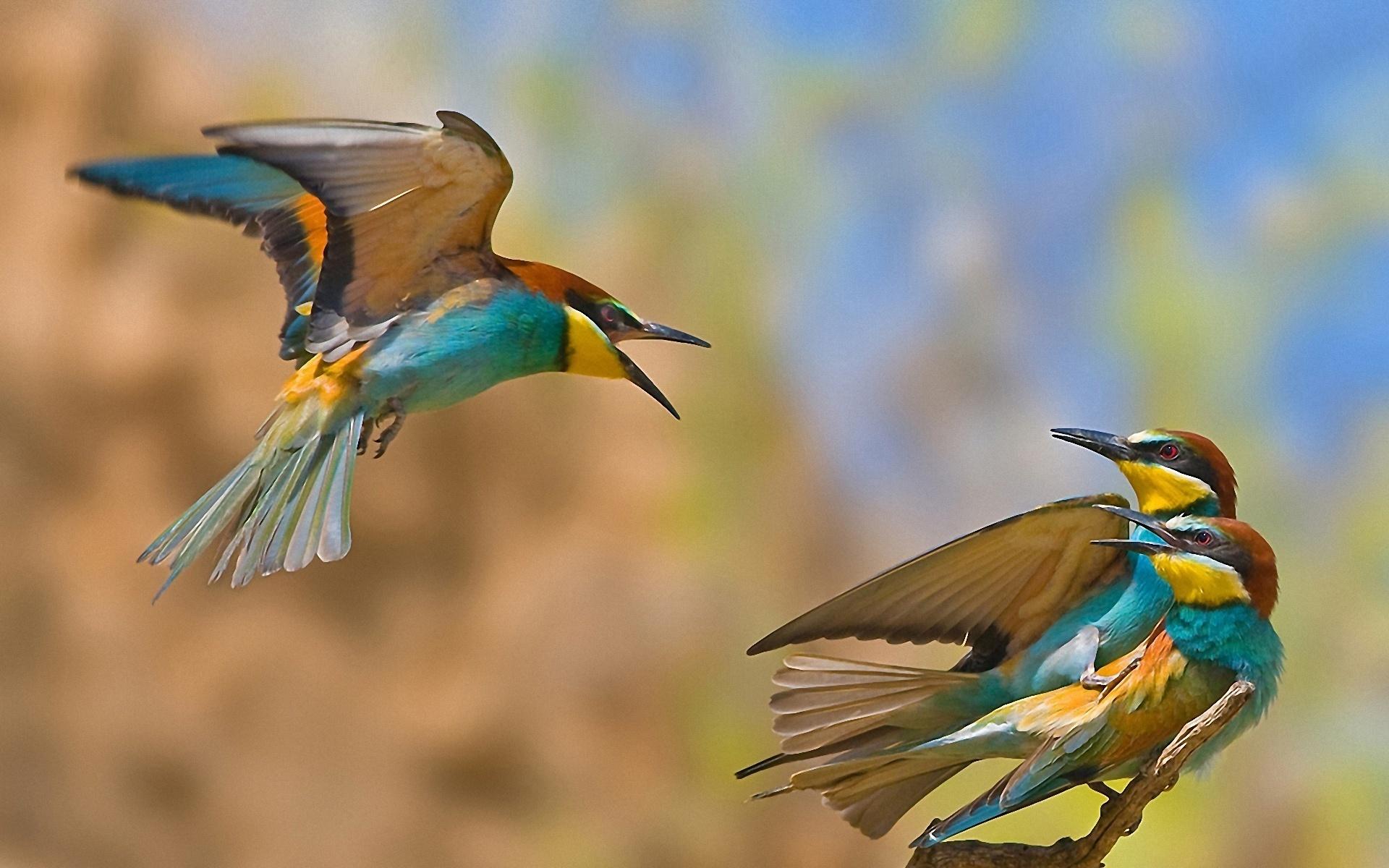 всё, что картинки красочных птиц астрология личной жизни