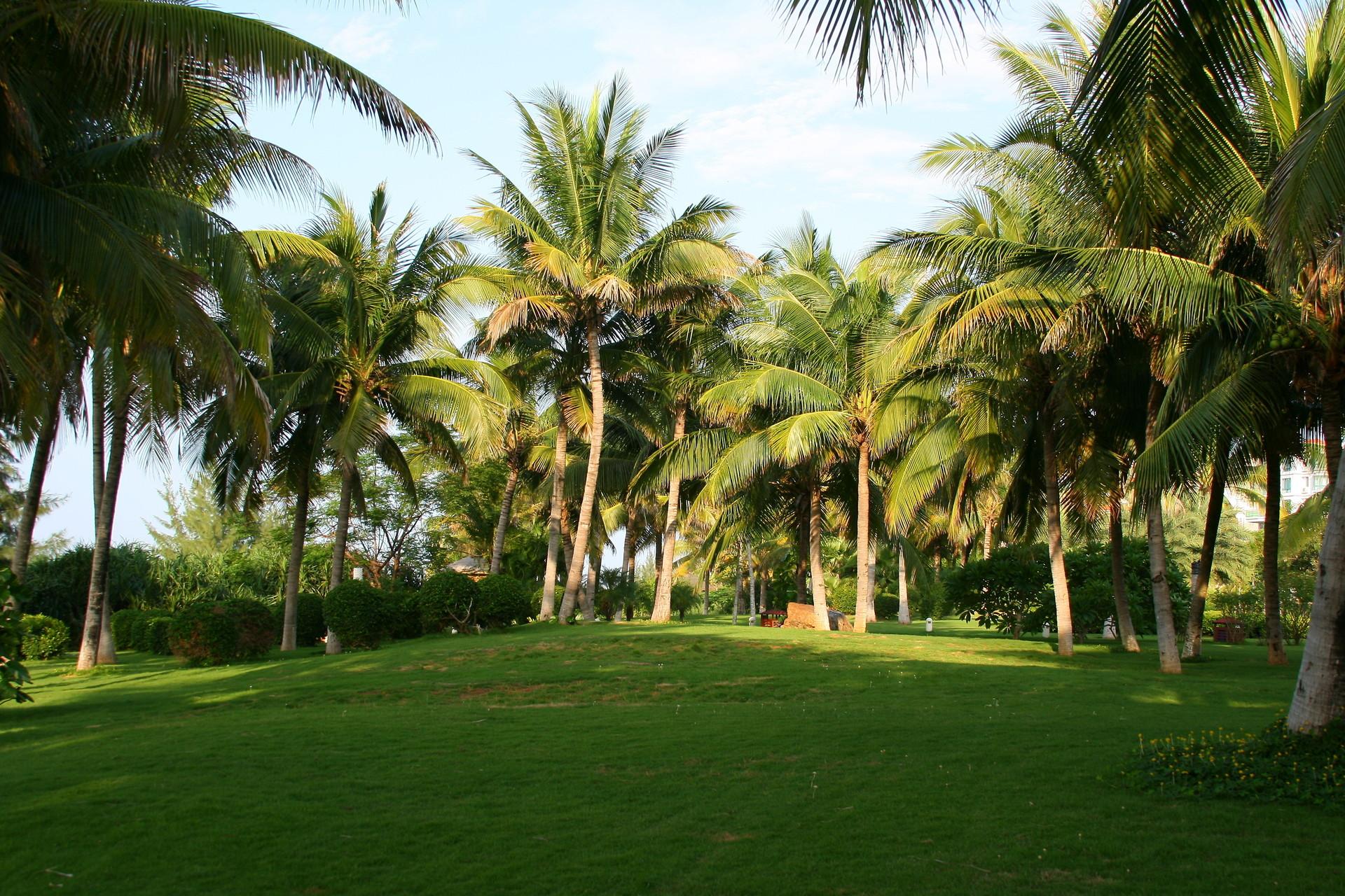 пальмы природа картинки купить сургуте