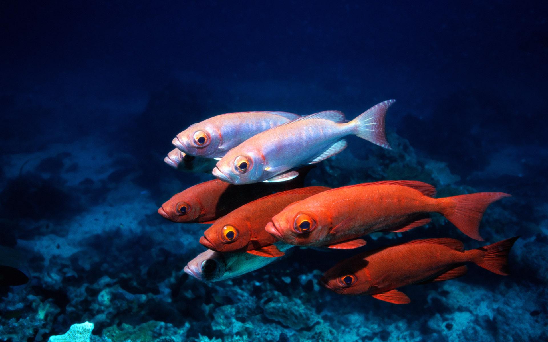 Лучшие картинки рыбы