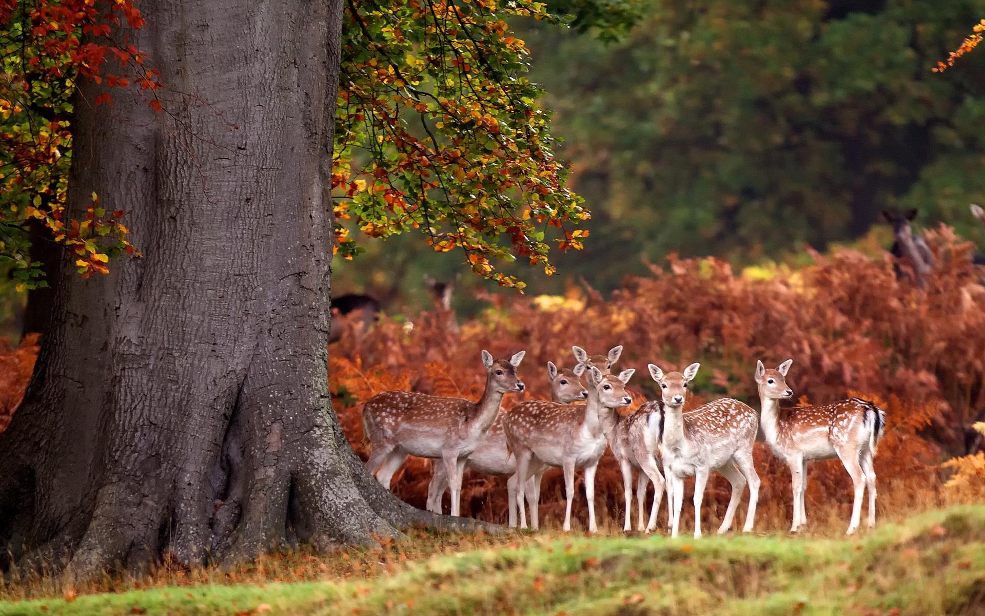 Смотреть красивые картинки про природу и животных