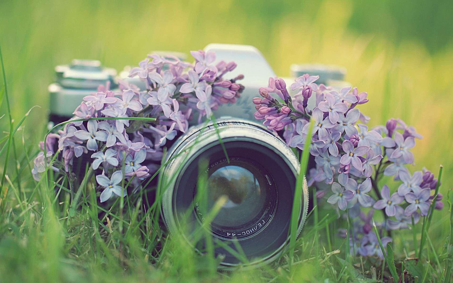 Красивые картинки ко дню фотографа