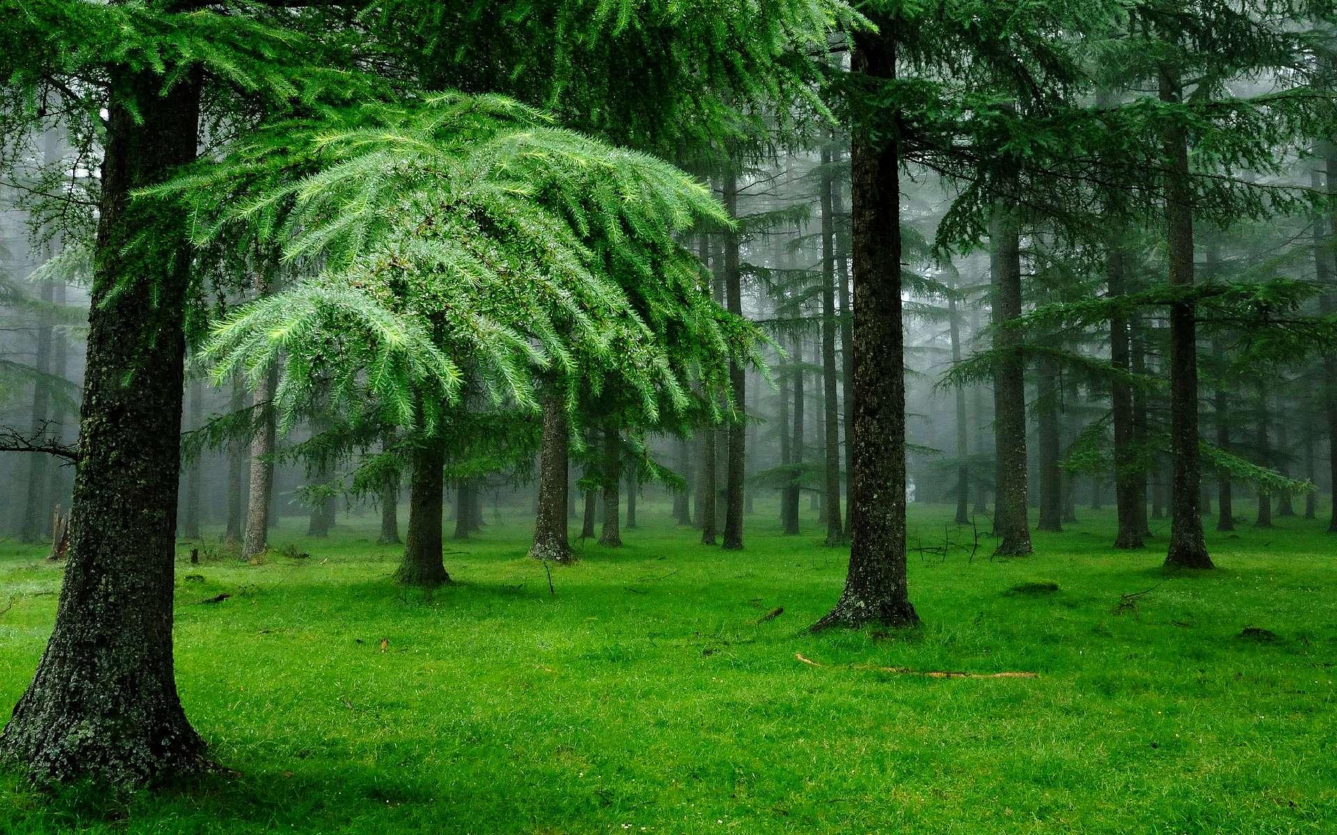 сына комбез, картинки на телефон фото изменение леса каждому возраст