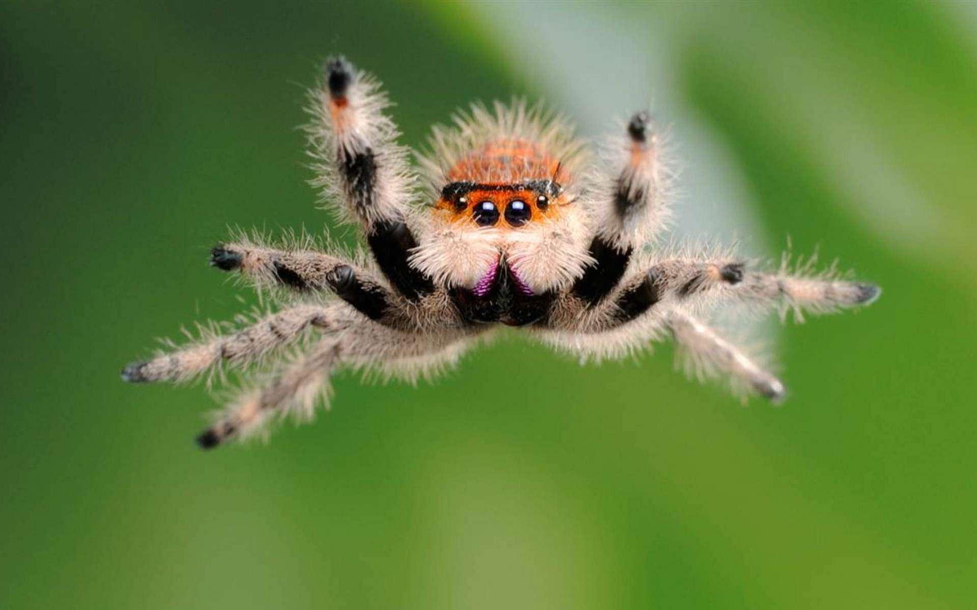 Смешные фото пауков