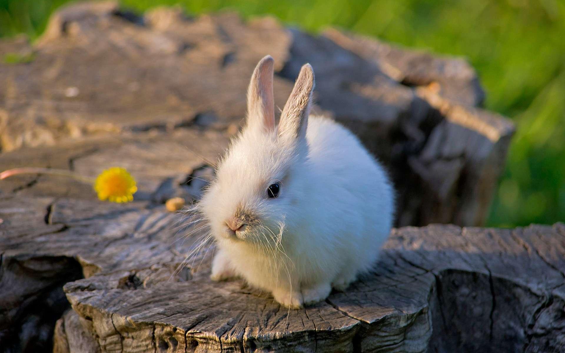 Фото картинок с зайчиками