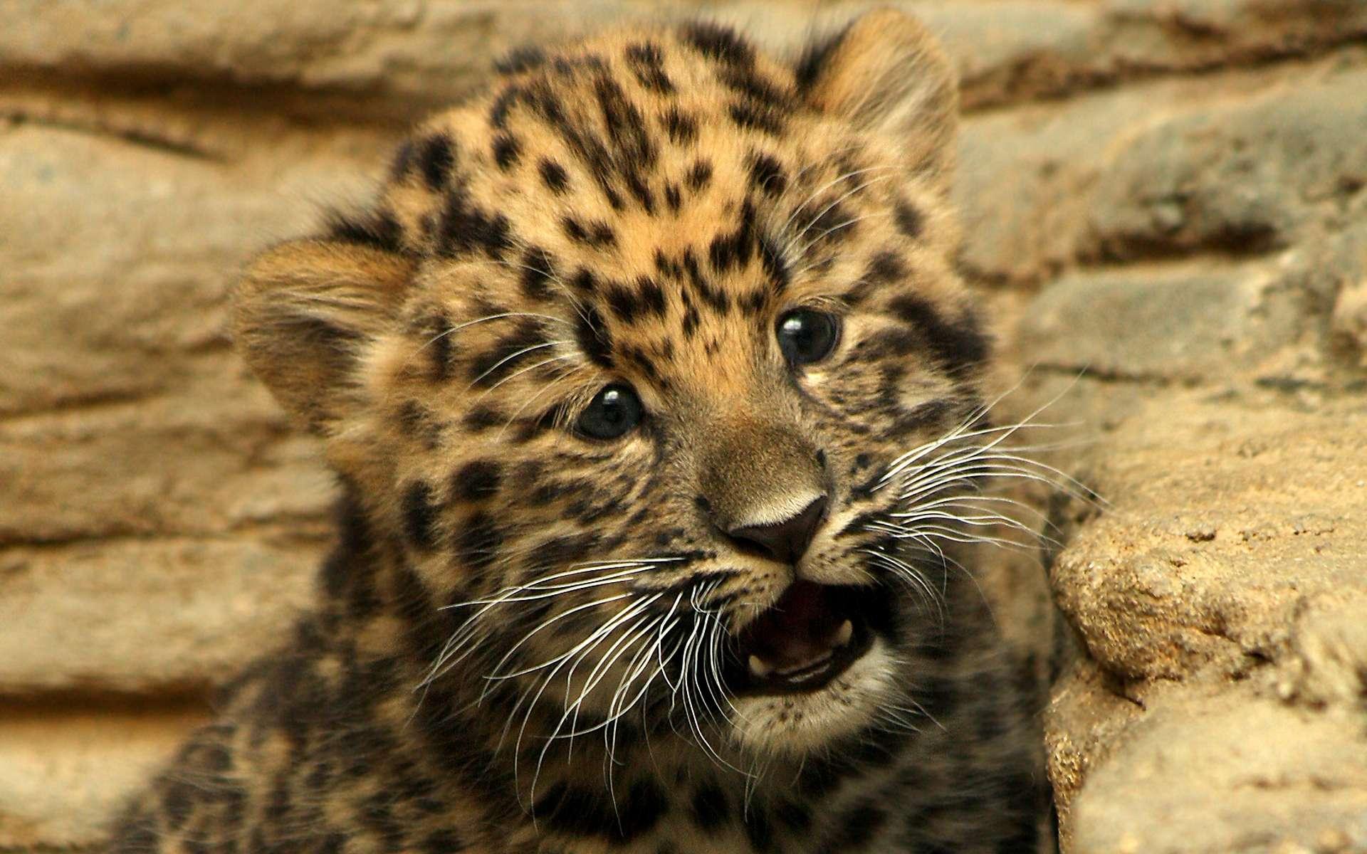 сайте показан картинки на рабочий стол котята леопарда шкафчики, полотенца кроватки