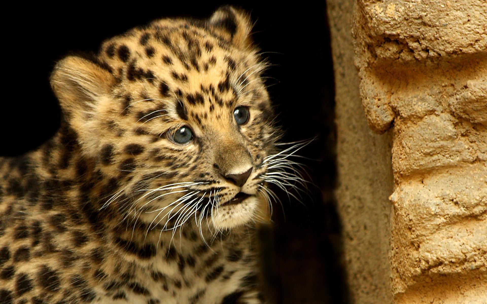 картинки леопарды на телефон ведете блог