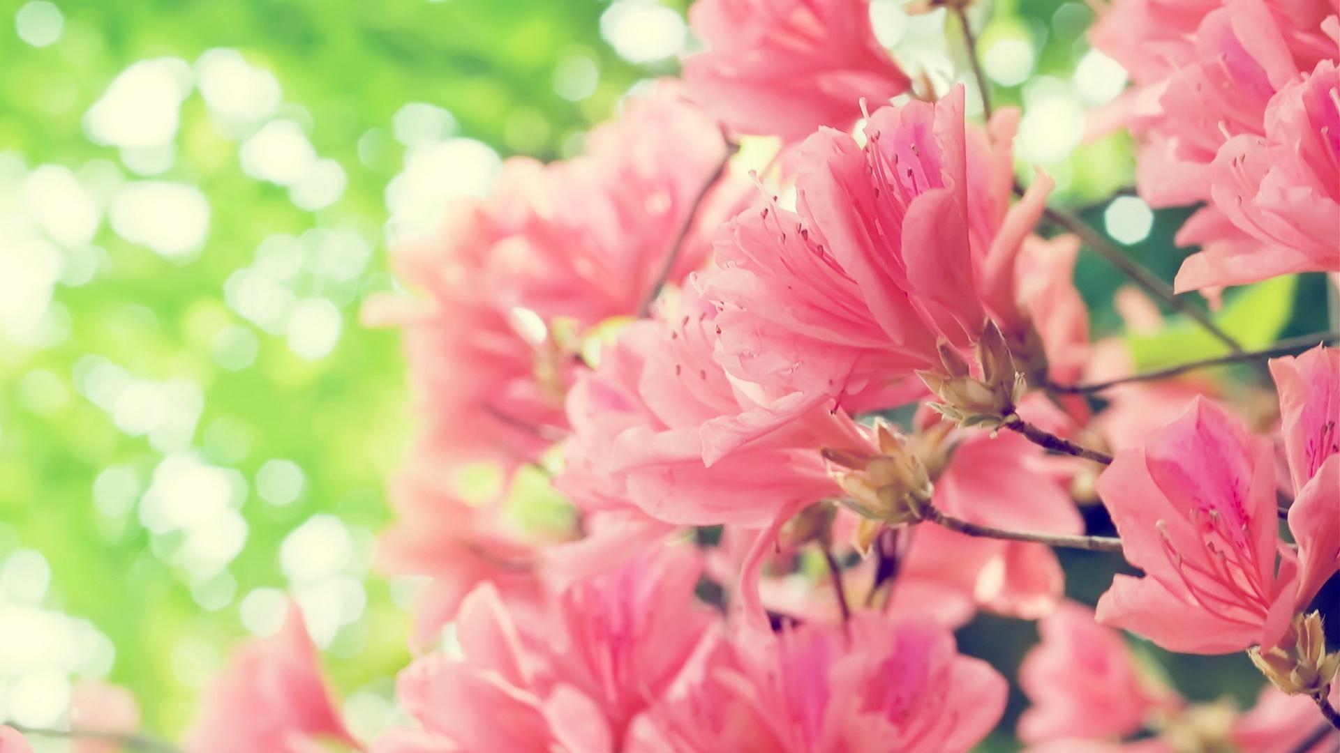 днях стало картинки цветы на рабочий стол большой формат полон очень интересных