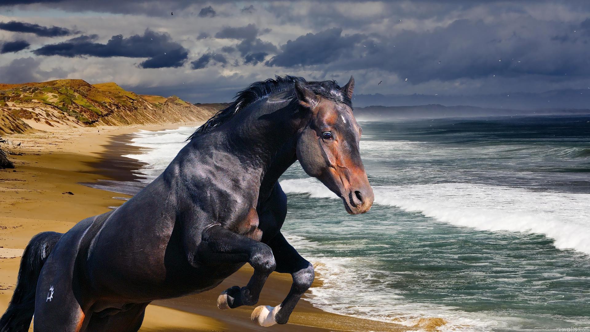 лошадь картинки большого разрешения гребню