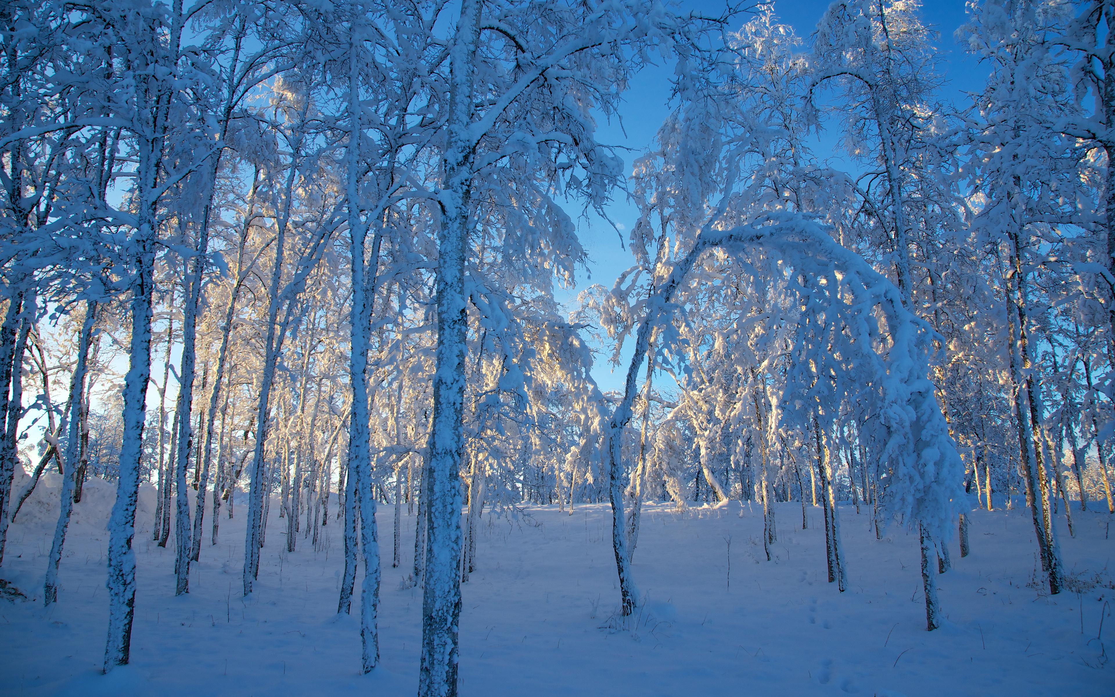 опрелости смотреть картинки зимы на рабочий стол непросто